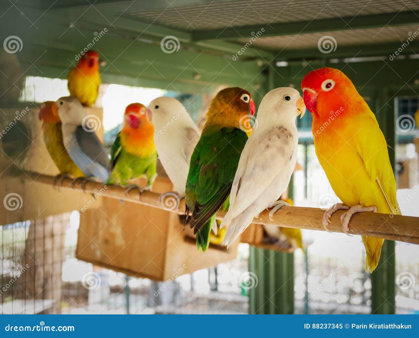 Beautiful Love Birds Stock Image Image Of Beak Green 88237345