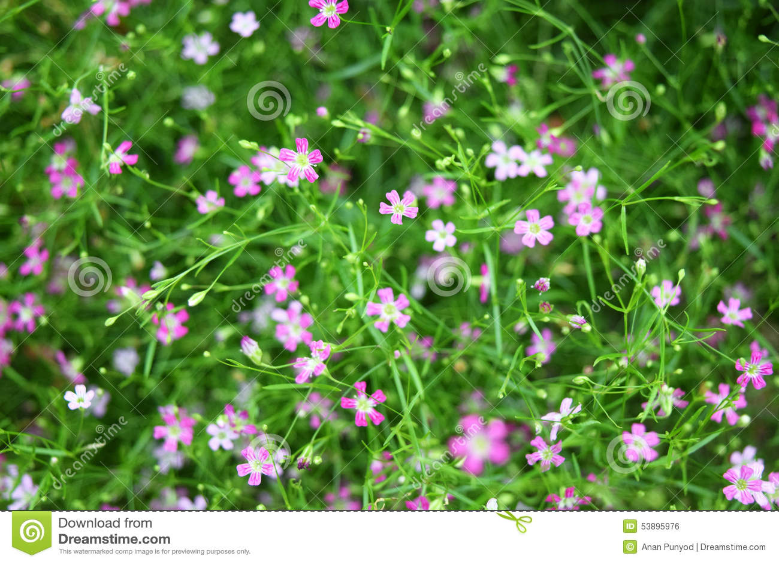 Beautiful lovely little pink flowers pattern with green leaves beautiful lovely little pink flowers pattern with green leaves decorated mightylinksfo