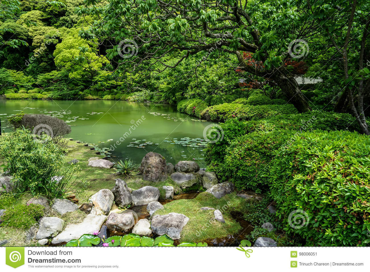 Beautiful Lush Green Japanese Garden Landscape With Shades Of