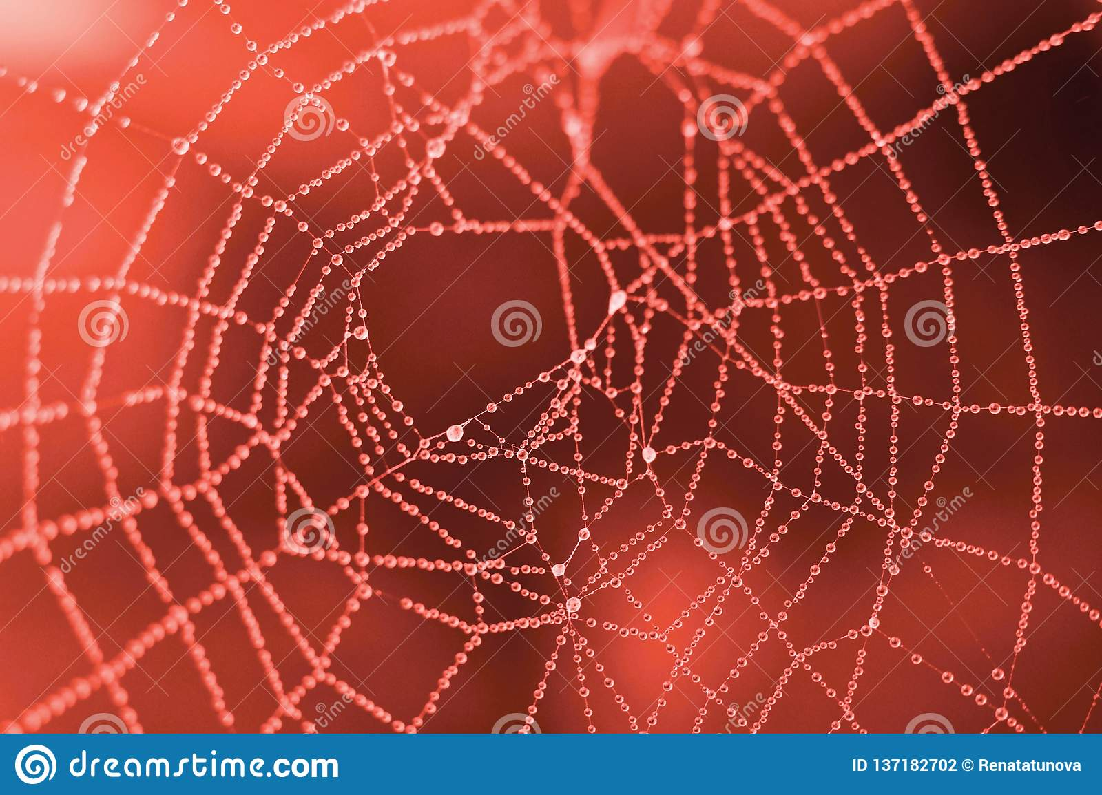 Beautiful macro droplets, web detail in trendy coral color on the black background