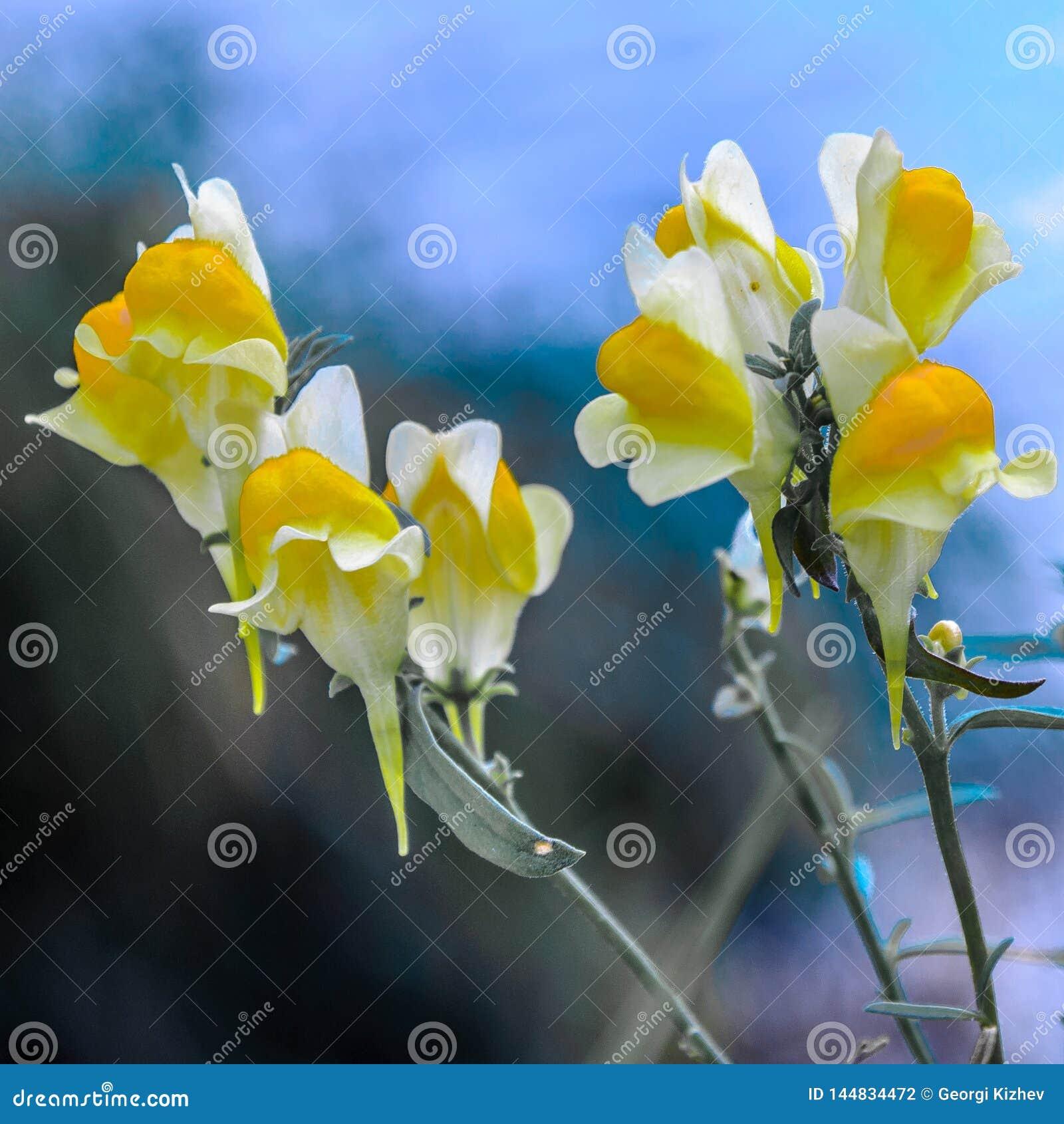 Macro yellow flowers