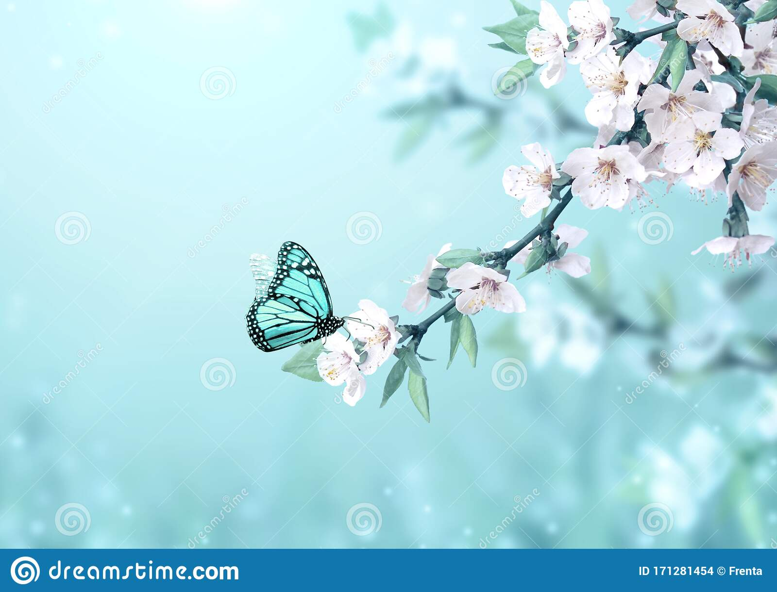 3 450 Magic Butterfly Photos Free Royalty Free Stock Photos From Dreamstime,Tapered Rectangular Lamp Shades Uk