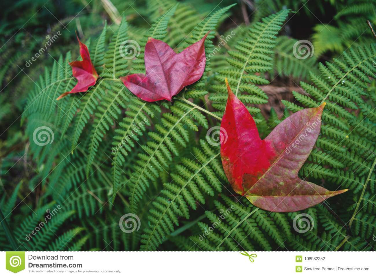 Beautiful Maple Leaf In Forest Stock Photo - Image of ...