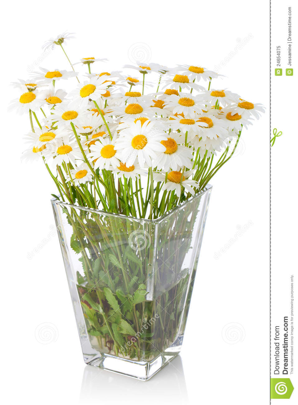 Beautiful Marguerite Flowers In Vase Royalty Free Stock ...