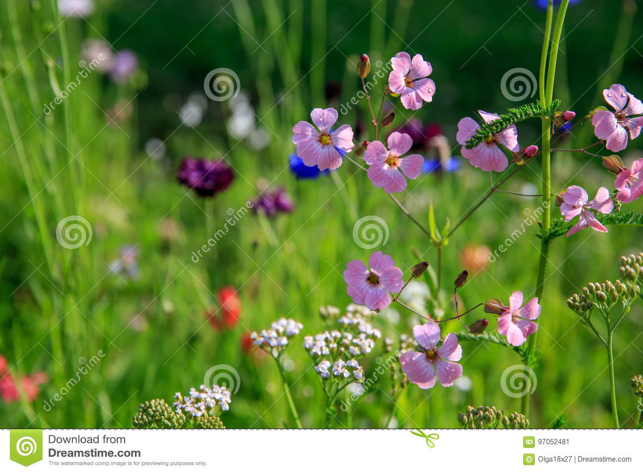 Beautiful meadow field with wild flowers. Spring Wildflowers closeup. Health care concept. Rural field. Alternative