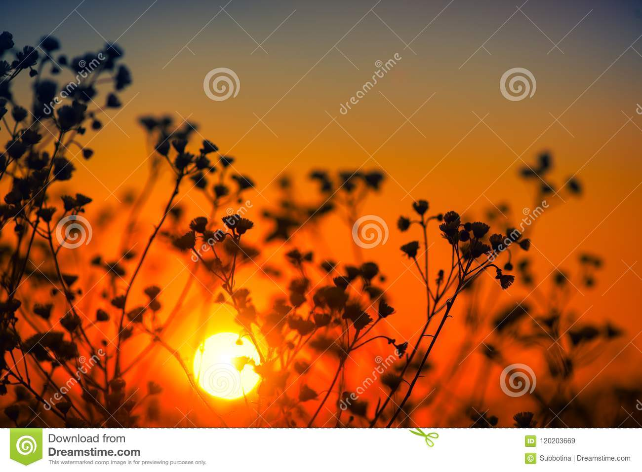 Beautiful meadow with wild flowers over sunset sky. Field of camomile medical flower, Beauty nature background