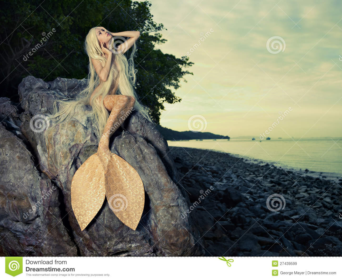 mermaid stock photos images u0026 pictures 11 223 images