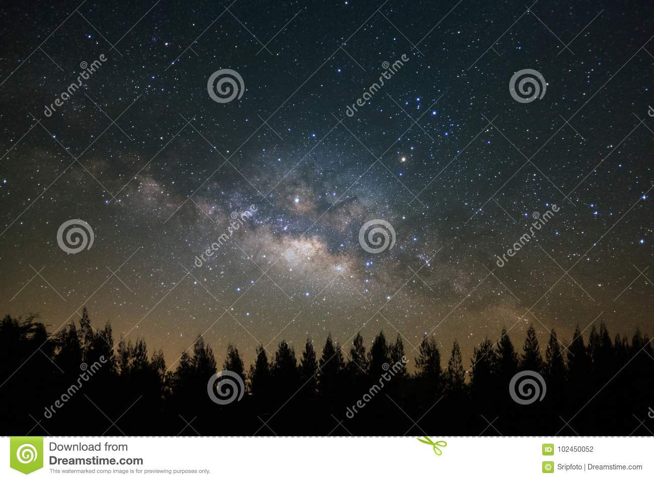 Beautiful milkyway and silhouette of pine tree on a night sky be