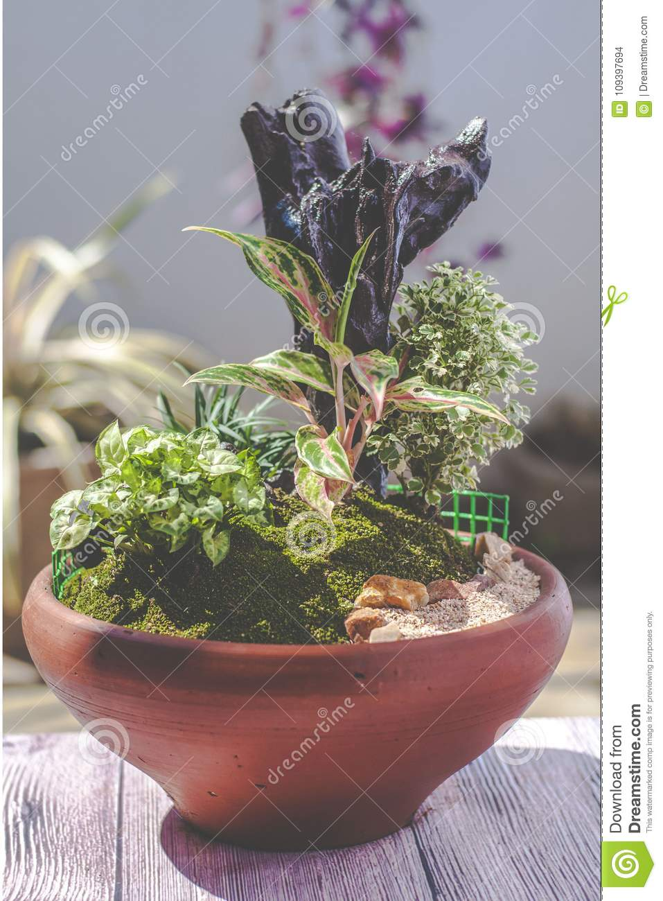 Mini Plant Terrarium In A Clay Pot Stock Photo Image Of Fall Full