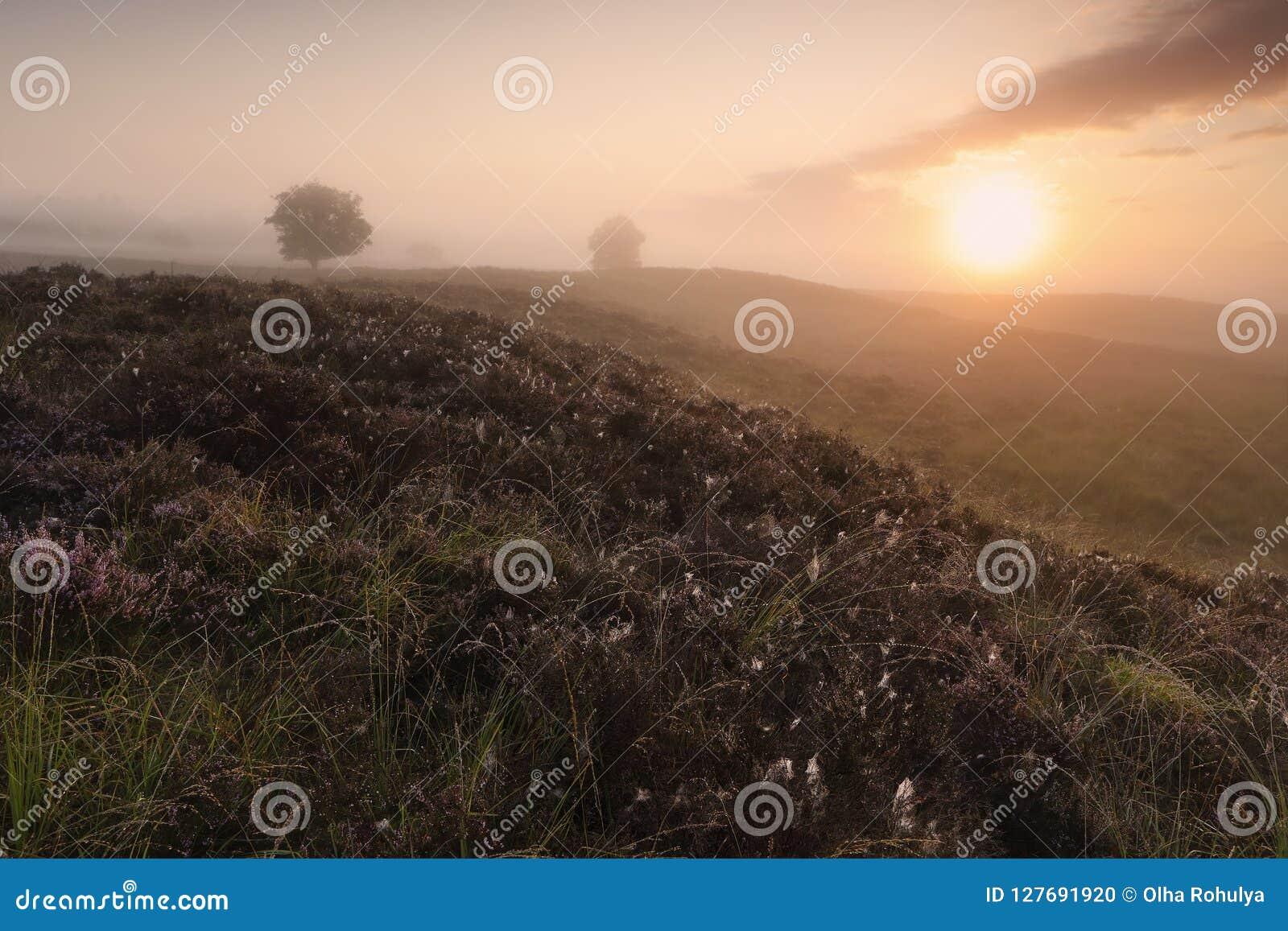 Beautiful misty sunrise over hills