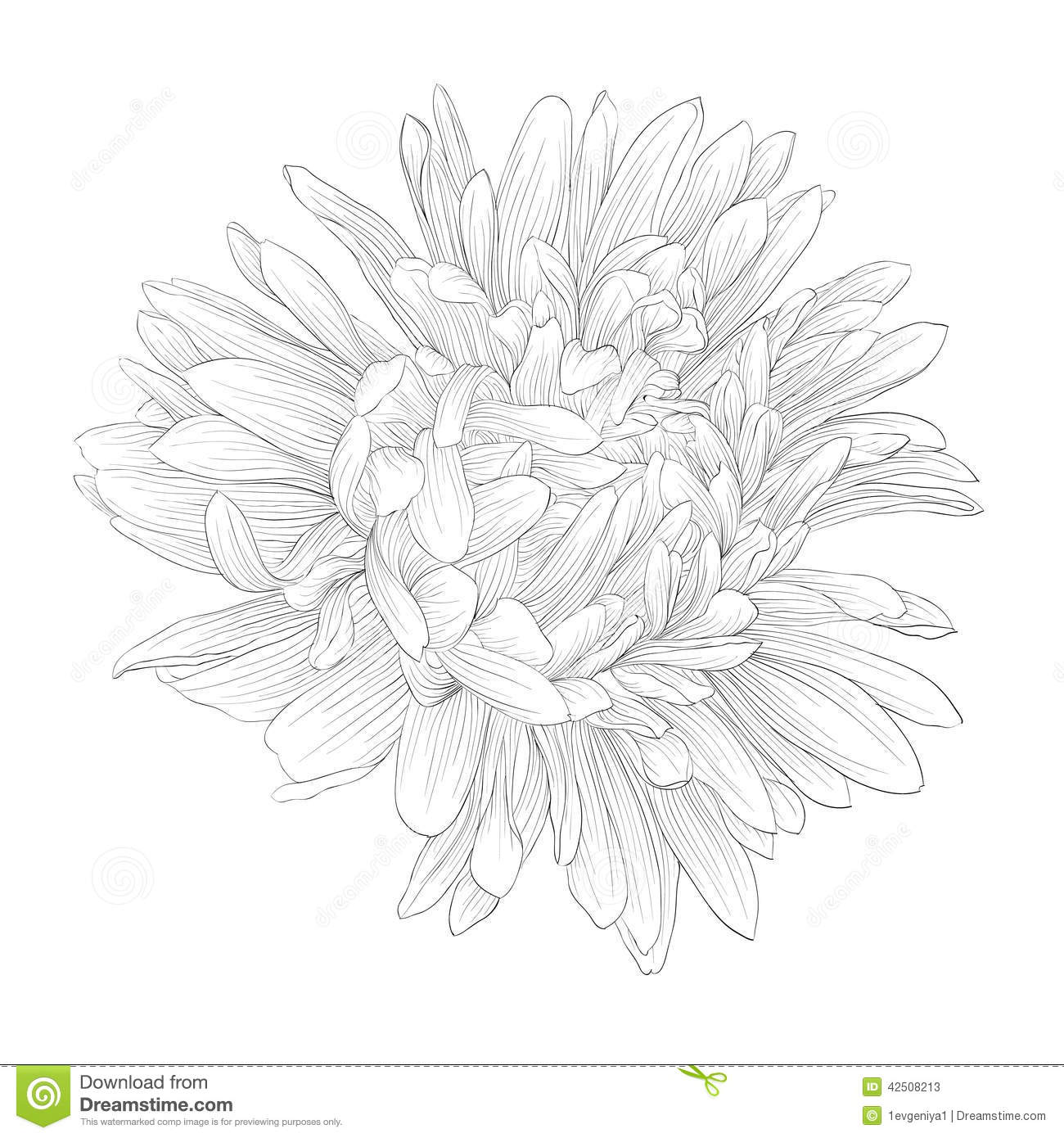 Aster Flower Line Drawing : White aster flower tattoo imgkid the image kid