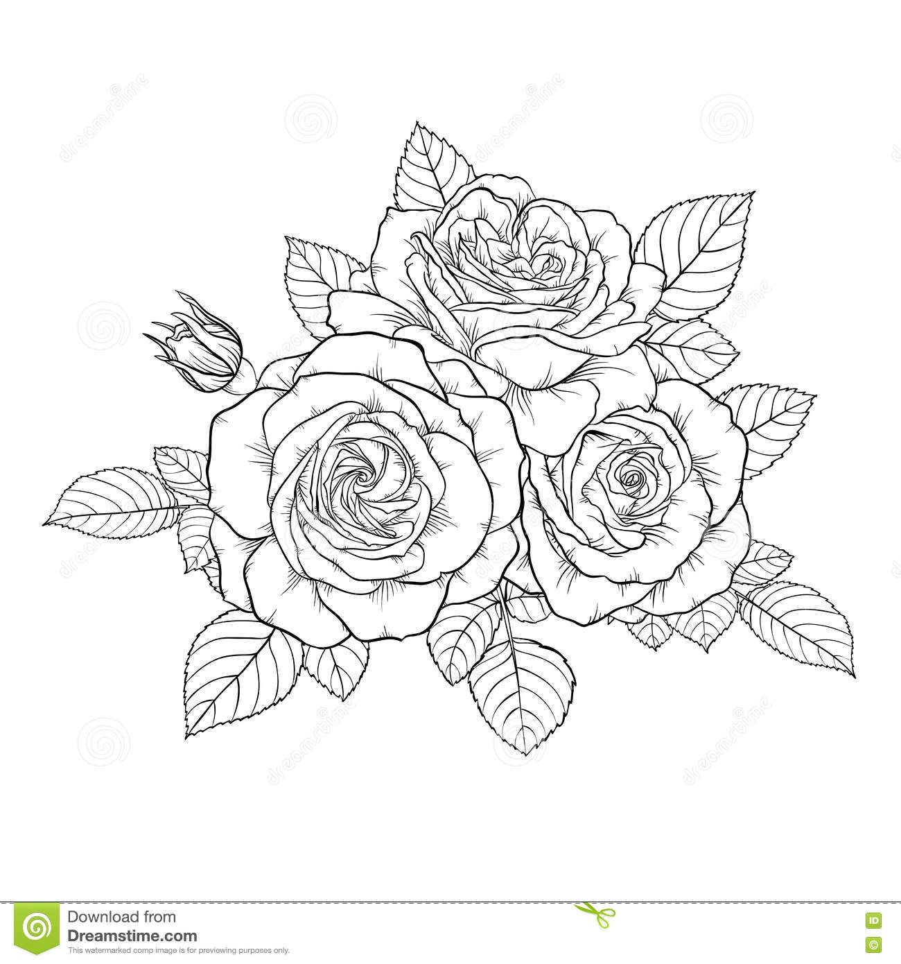Beautiful Monochrome Black And White Bouquet Rose Isolated On Background. Stock Vector ...