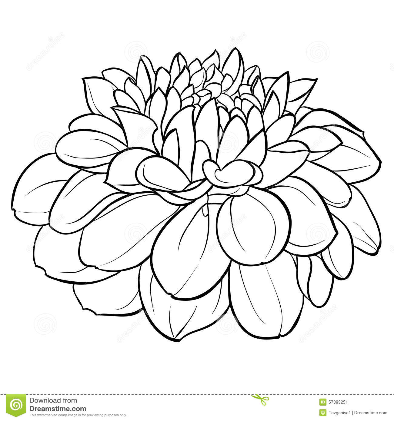 Contour Line Drawing Of A Flower : Beautiful monochrome black and white dahlia flower
