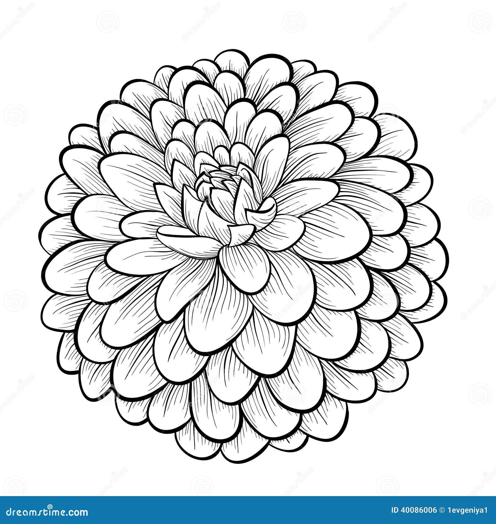 Beautiful Flower Line Drawing : Beautiful monochrome black and white dahlia flower