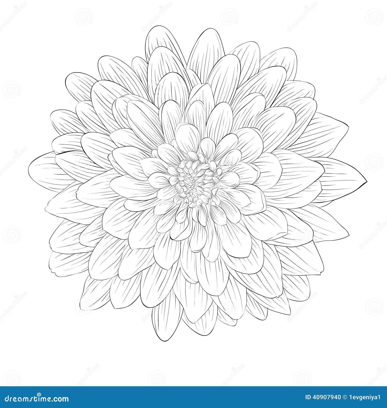 Black Dahlia Flower Tattoo Comousar