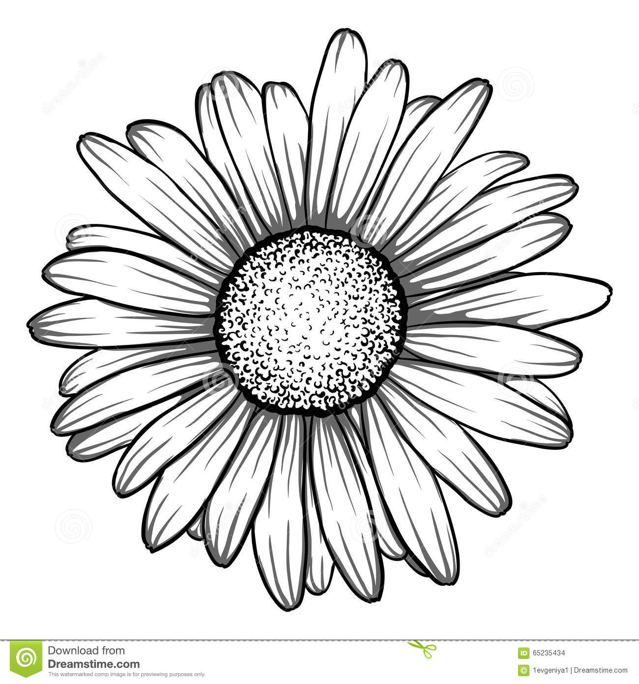 Beautiful Monochrome Black And White Daisy Flower Stock