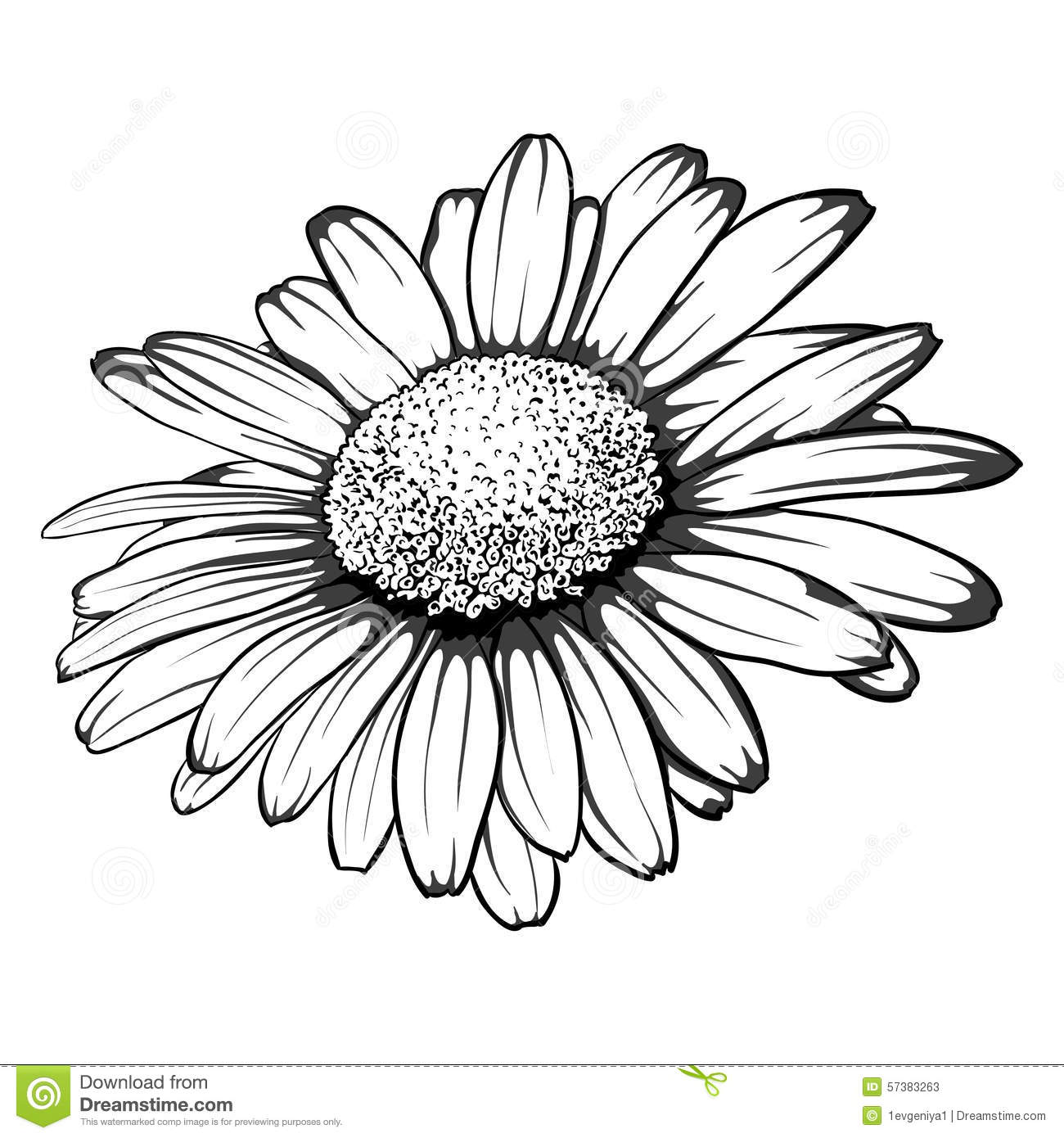 Beautiful Monochrome Black And White Daisy Flower