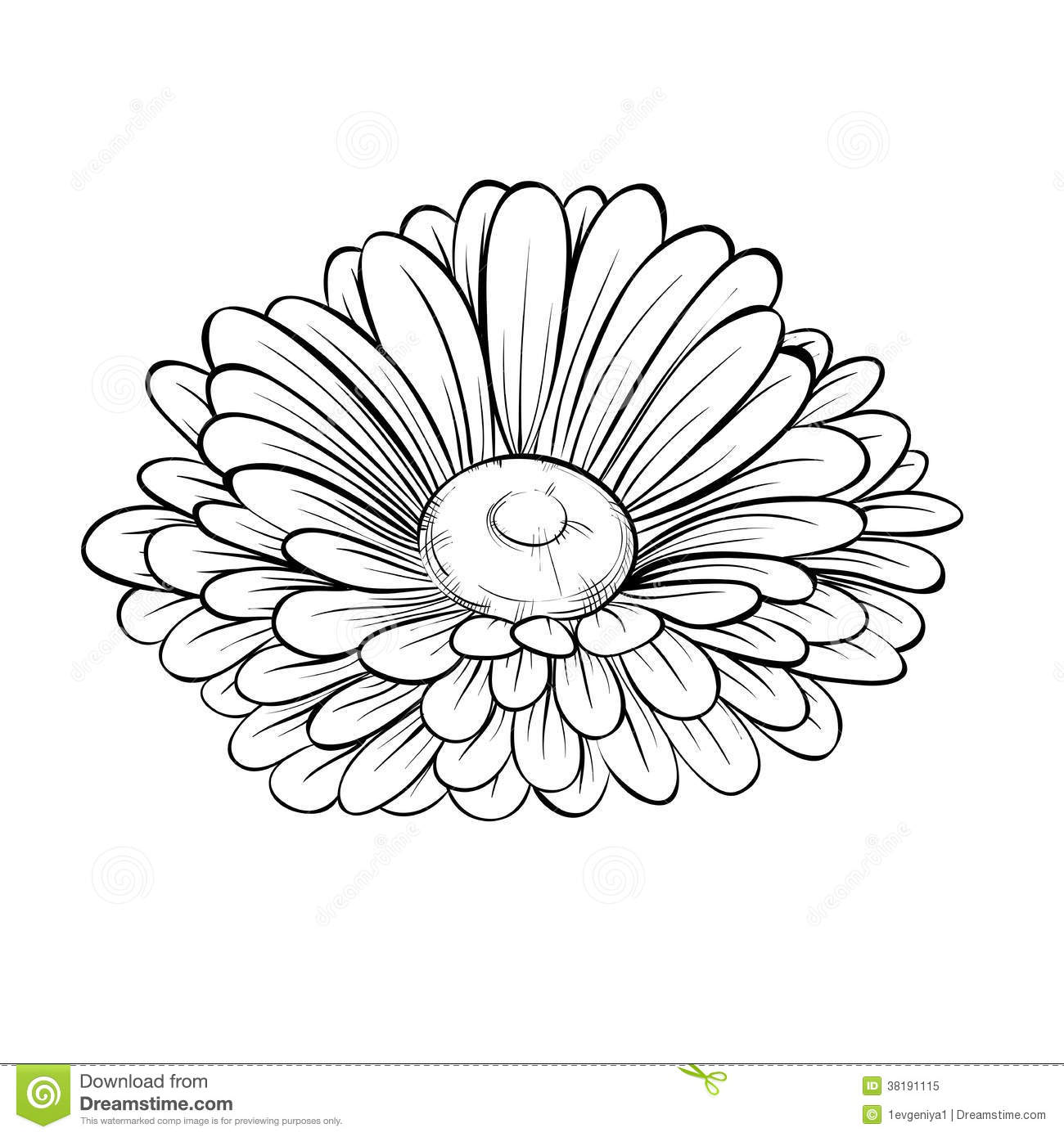 Gerbera Daisy Line Drawing Hand-drawn contour lines and