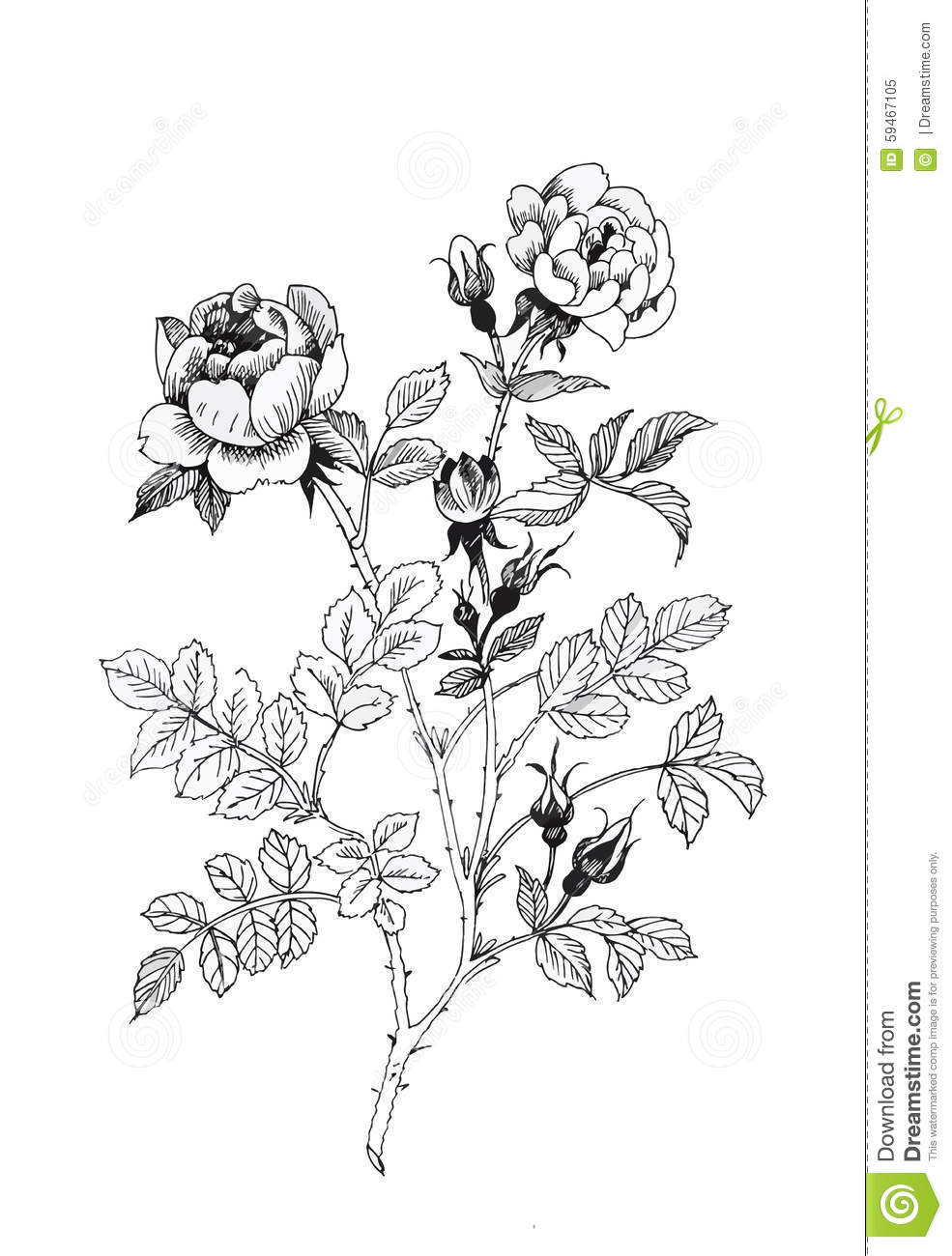 Beautiful Flower Line Drawing : Beautiful black and white flower hand drawing cartoon