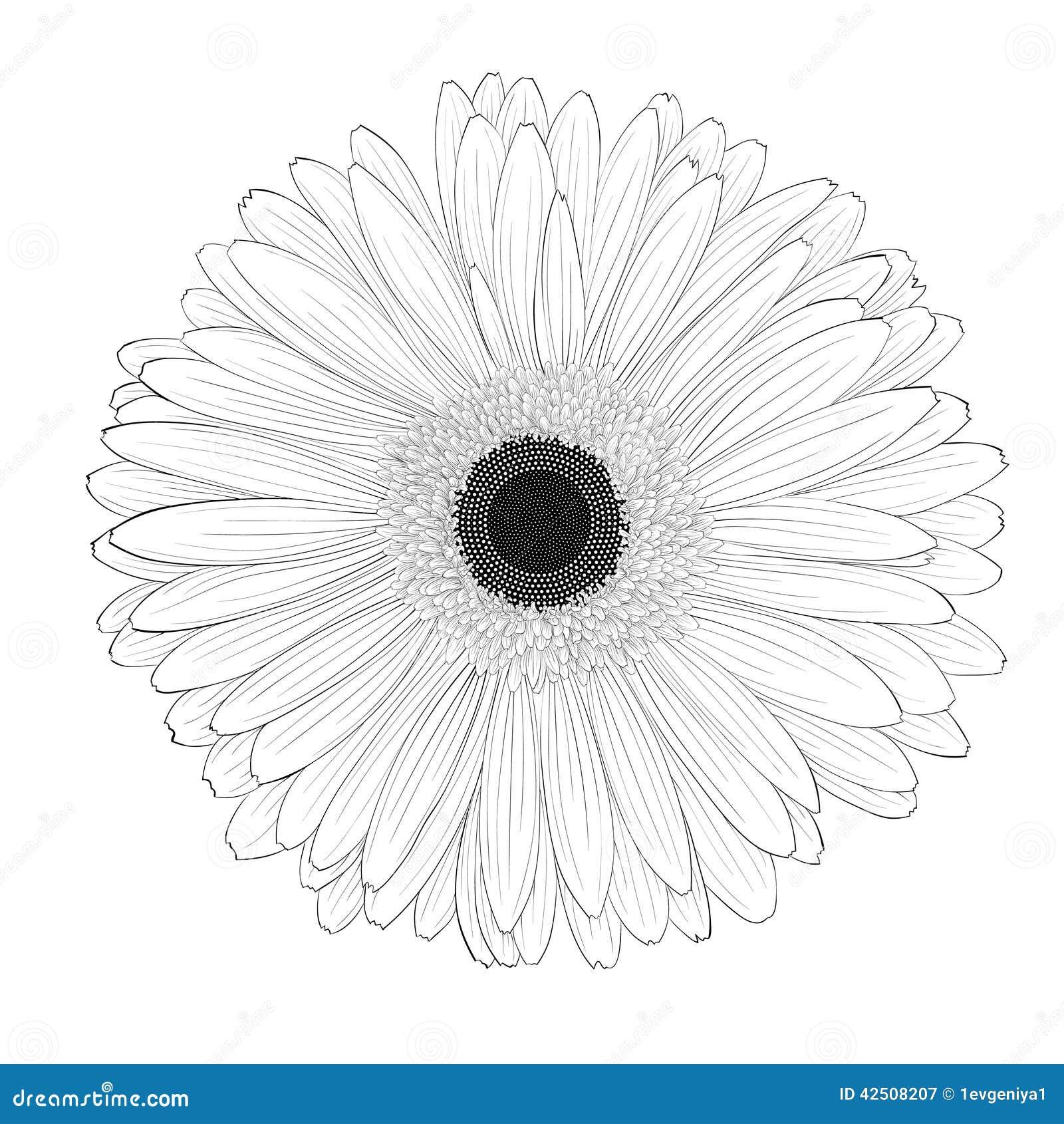 Gerbera Daisy Line Drawing Beautiful Monochrome, ...