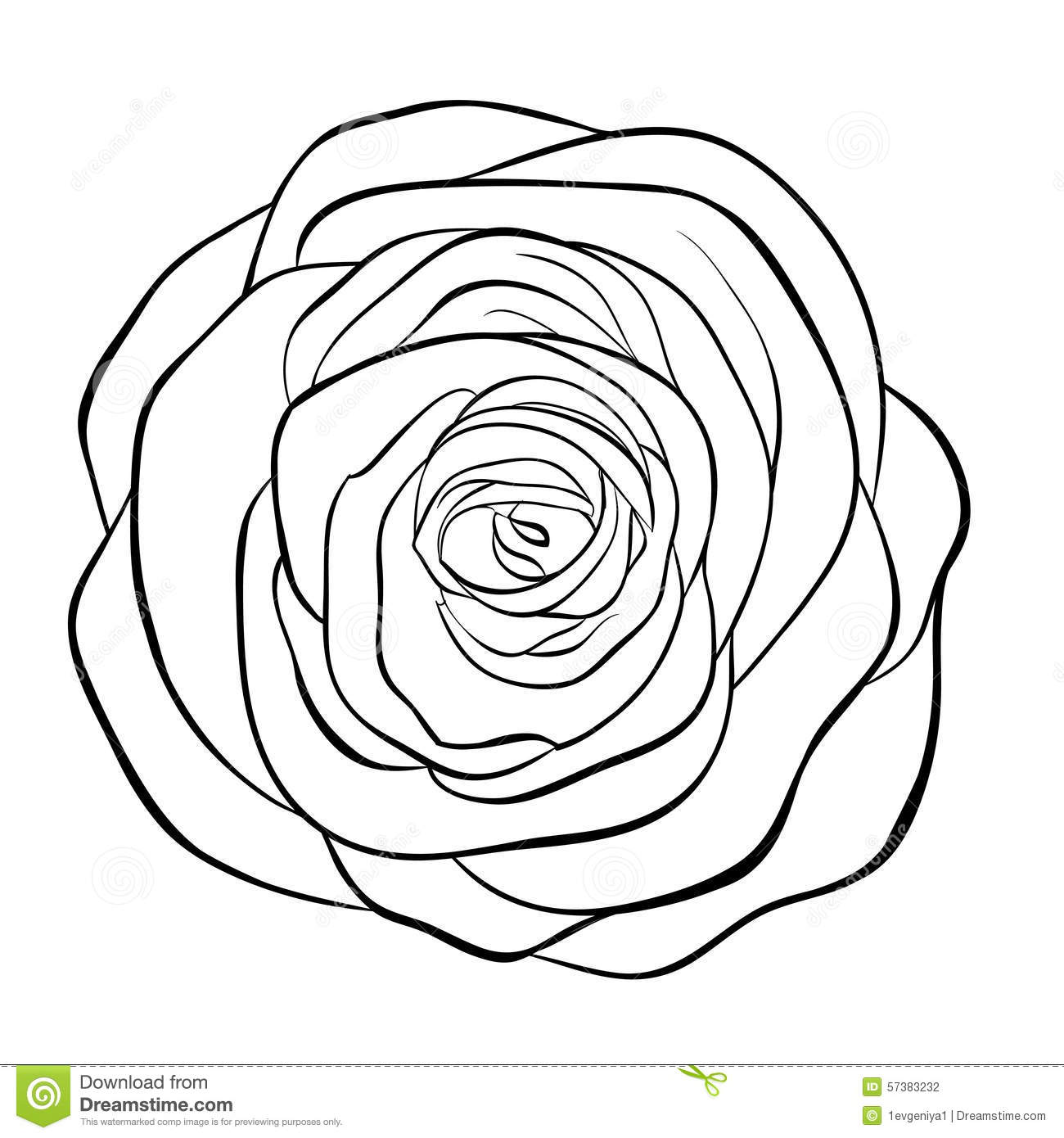 Line Art Rose : Beautiful monochrome black and white rose isolated on