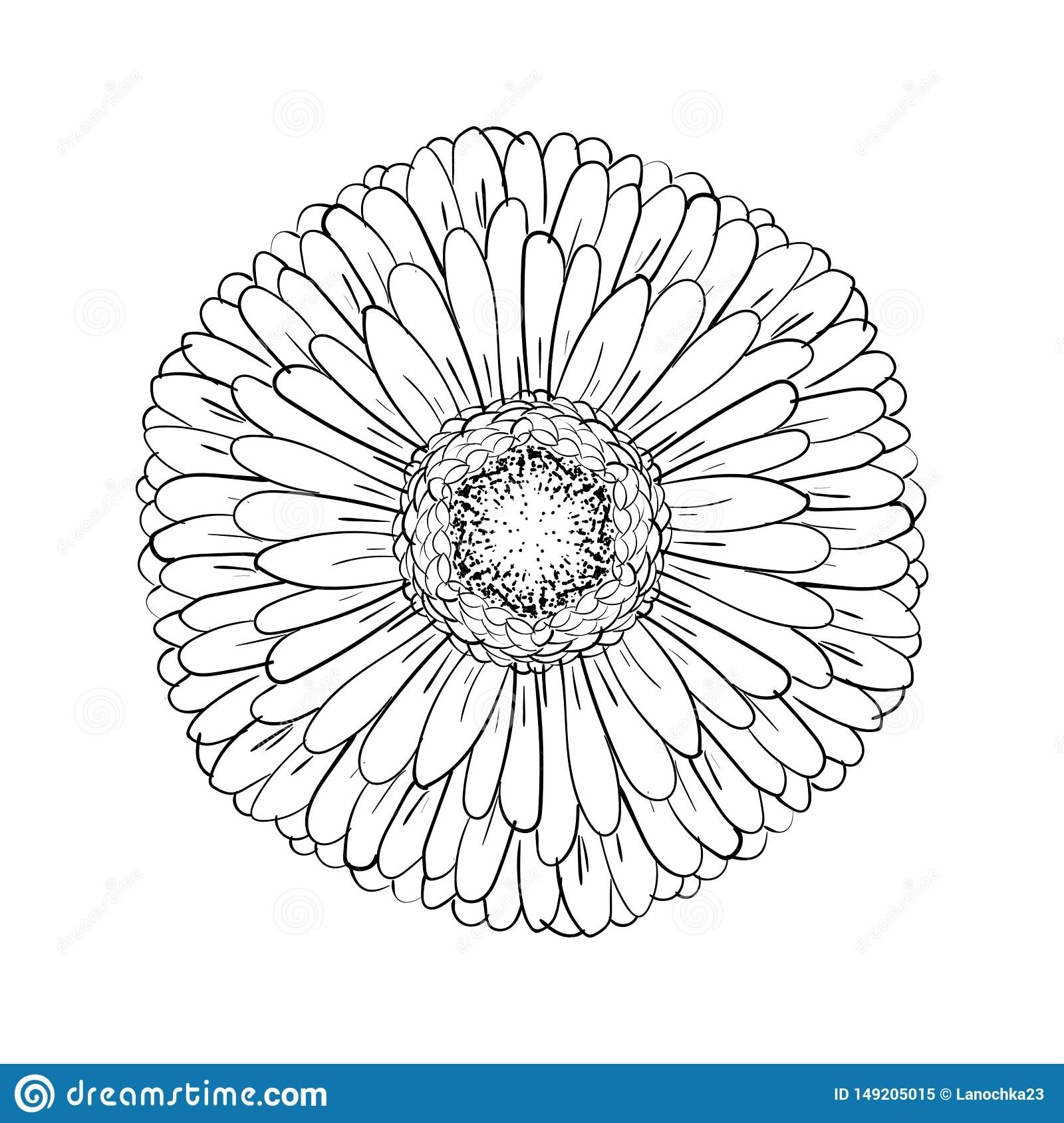 Beautiful monochrome gerbera isolated on white background. for greeting cards, wedding invitations, birthday, Valentine`s Day,