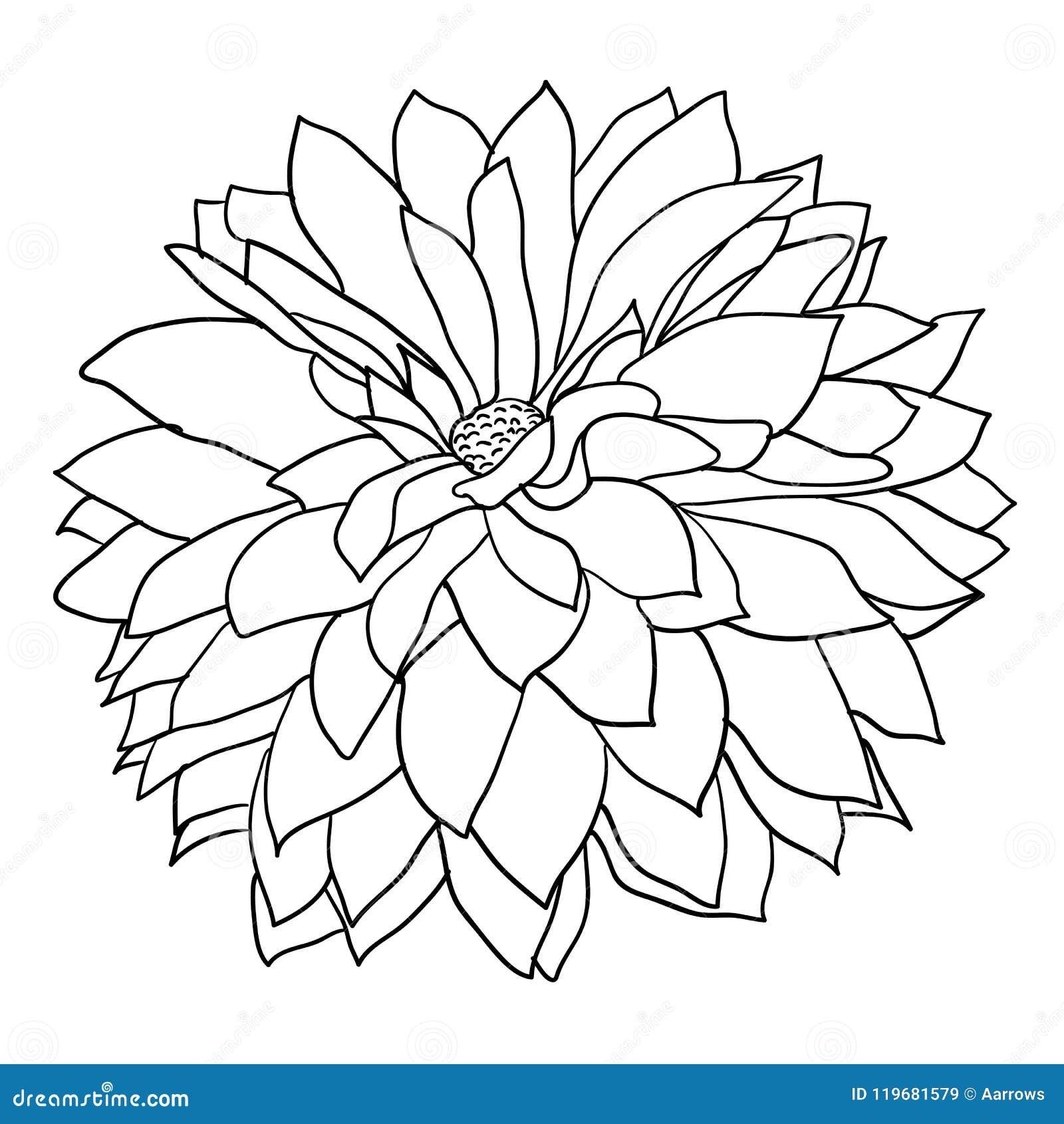 Dahlia flower and botanical - Download Free Vectors, Clipart Graphics &  Vector Art