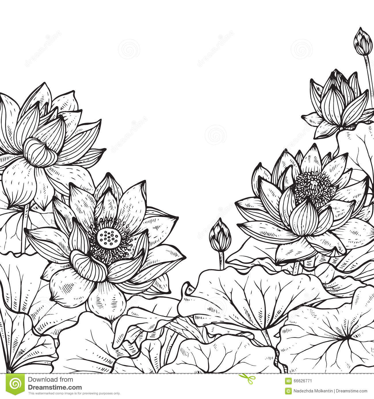 Water Lily Stencil Black And White: Lotus Water Lily Vector Beautiful Flower Line, Black And
