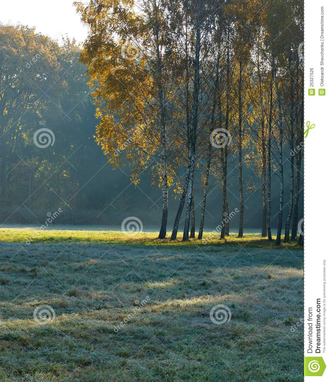 Beautiful Morning Landscape With Birch Trees Royalty Free Stock Image