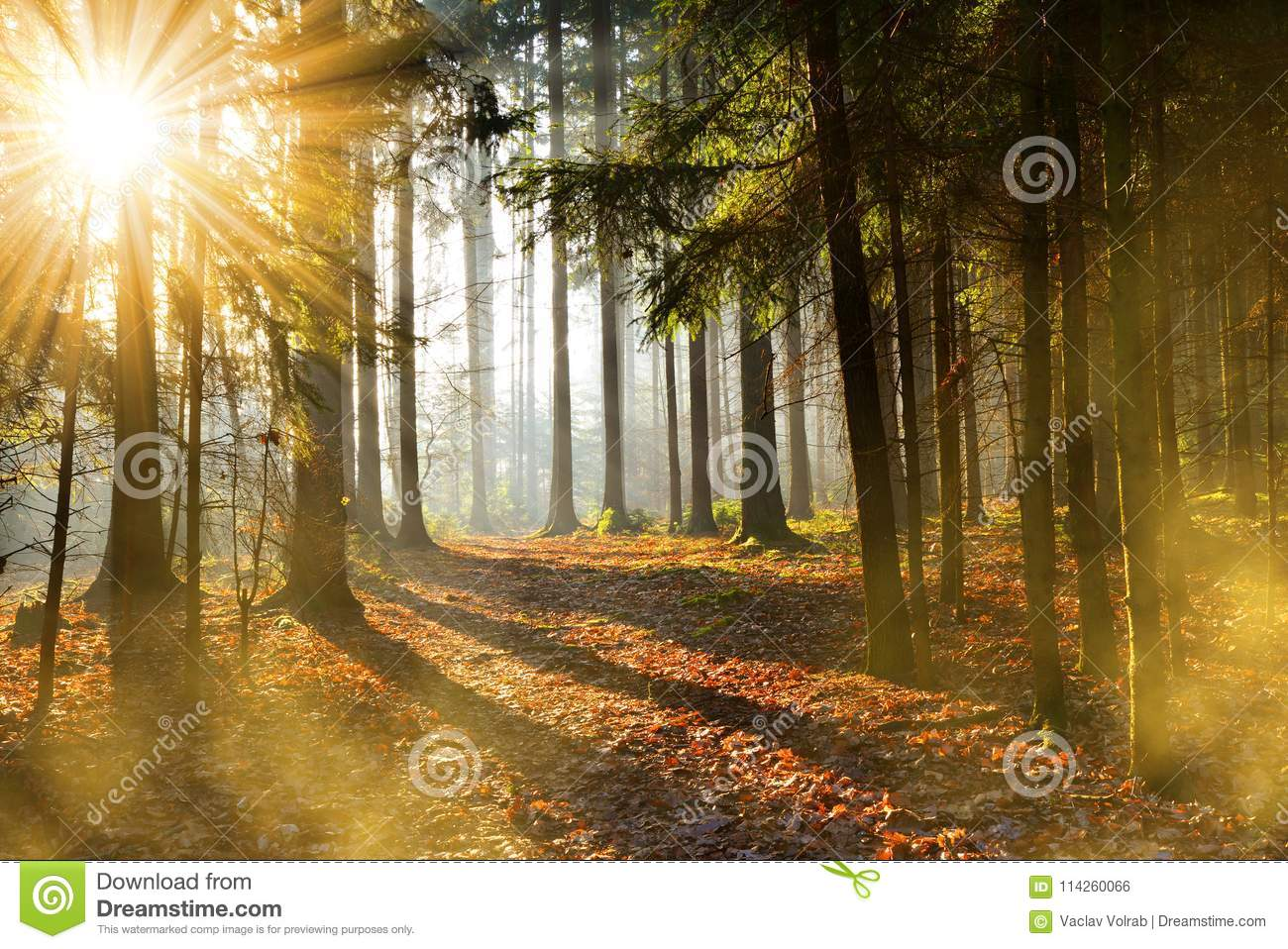 Beautiful morning scene in the forest with sun rays.