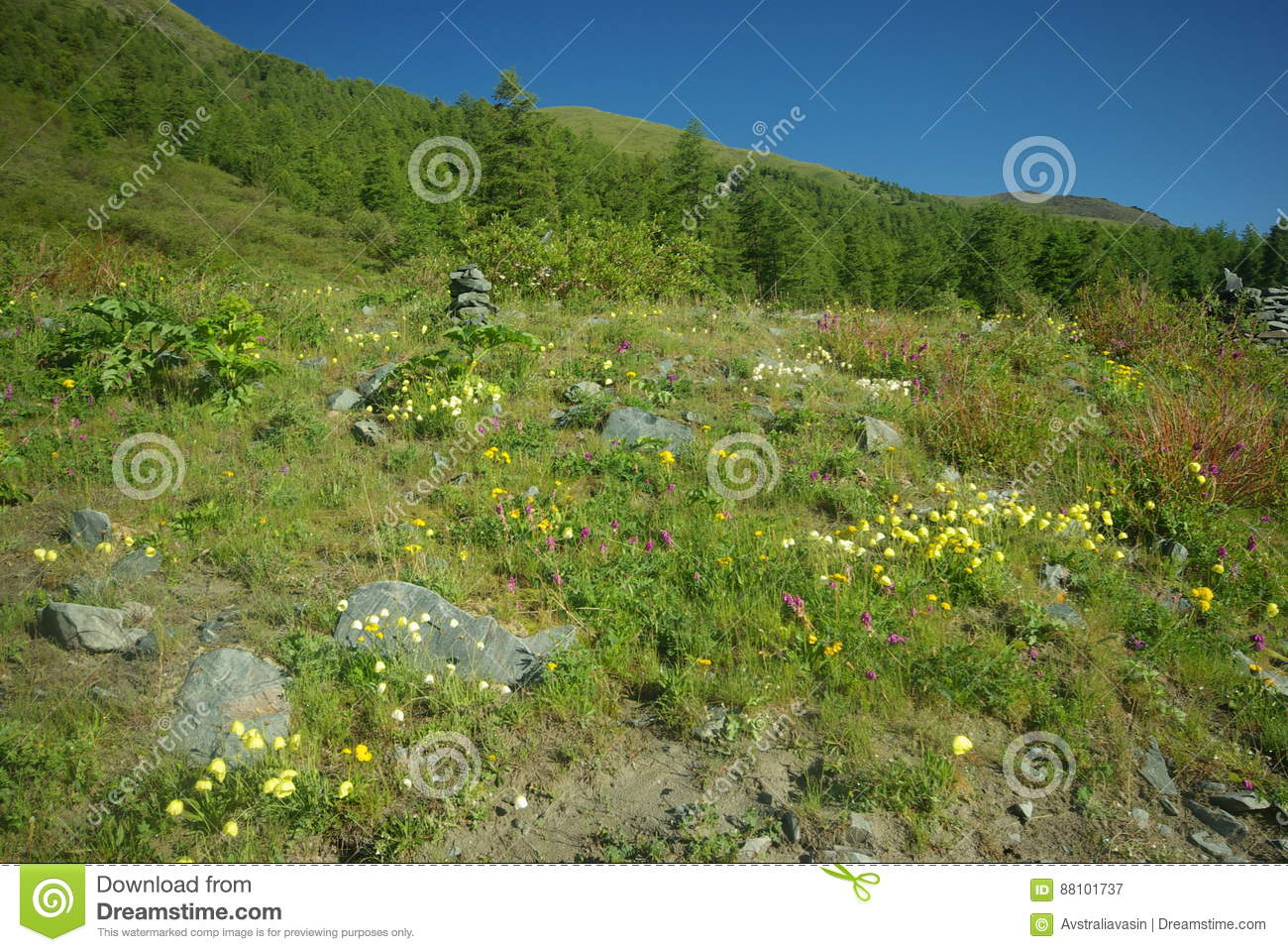 Beautiful Mountain Flowers Flora Of Mountain Ranges Stock Image
