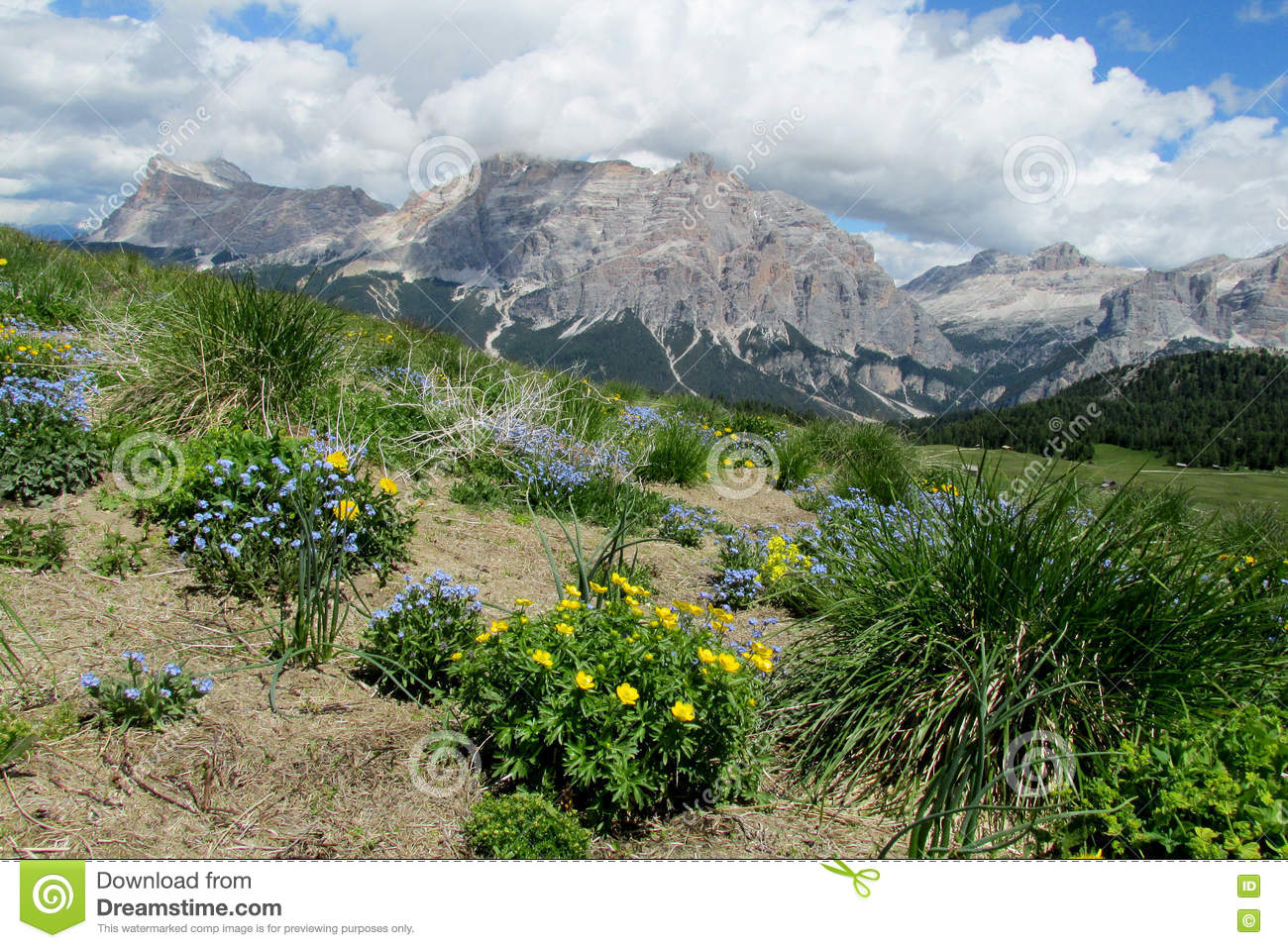Beautiful Mountain And Flowers Stock Image Image Of Dolomite