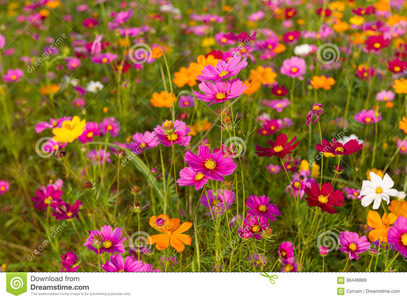 Beautiful multicolored flowers field romantic flower background and beautiful multicolored flowers field romantic flower background and wallpaper mightylinksfo