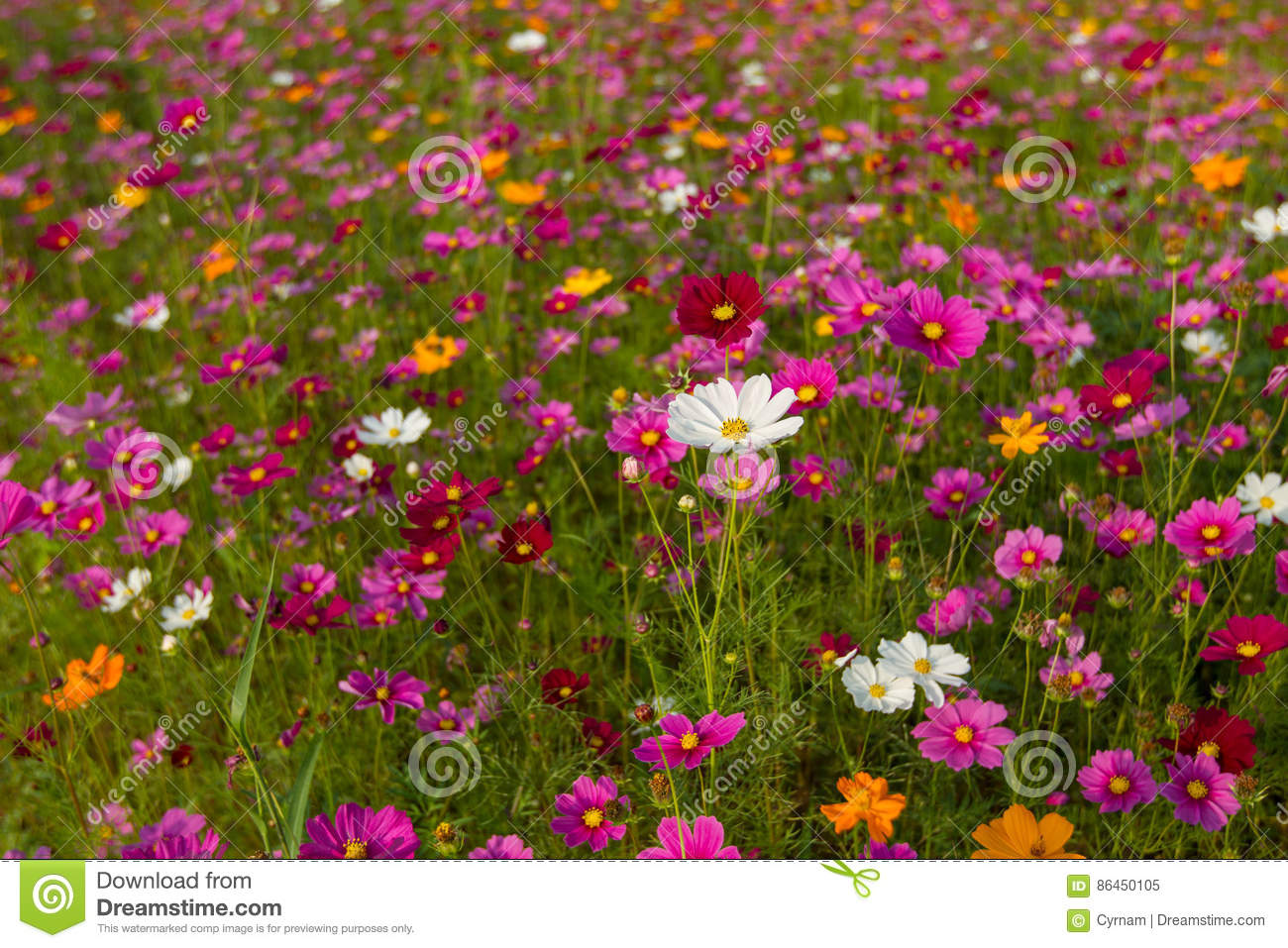 Beautiful Multicolored Flowers Field Romantic Flower Background And