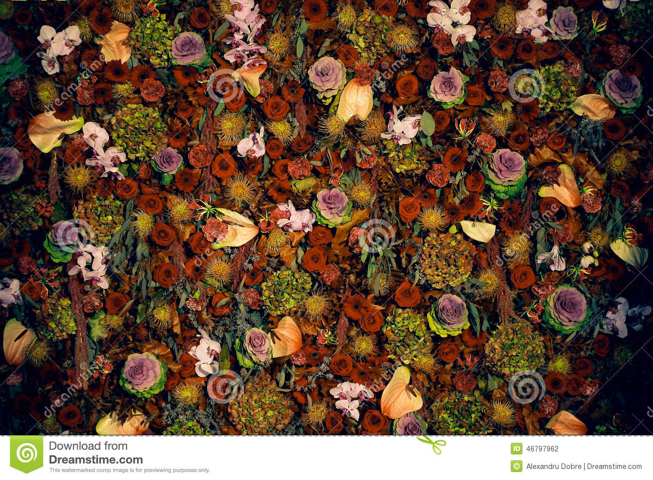 Beautiful natural flower wall texture stock photo image for Dream plants for the natural garden