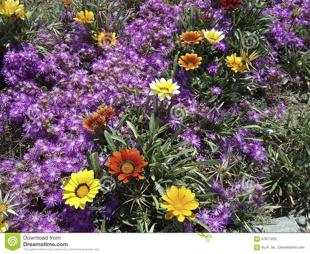 Beautiful natural flowers colorful yellow red purple stock image beautiful natural flowers colorful yellow red purple izmirmasajfo