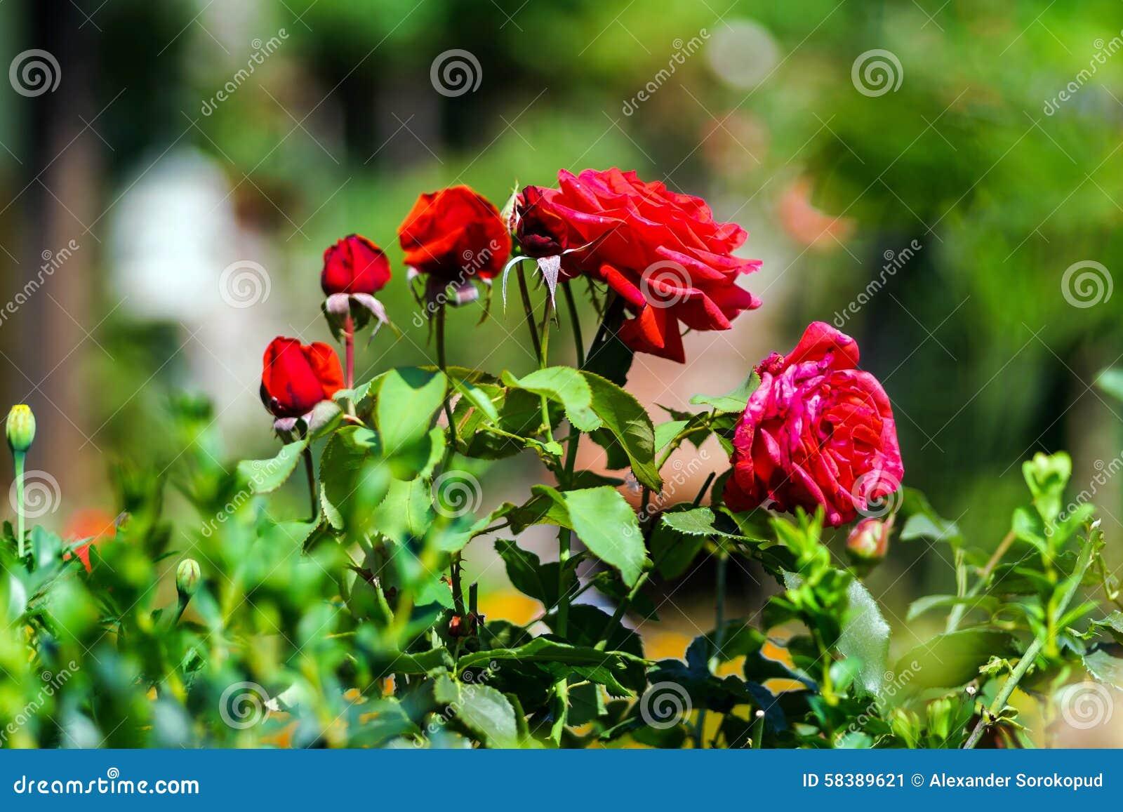 Beautiful natural flowers in private garden stock image image of beautiful natural flowers in private garden izmirmasajfo