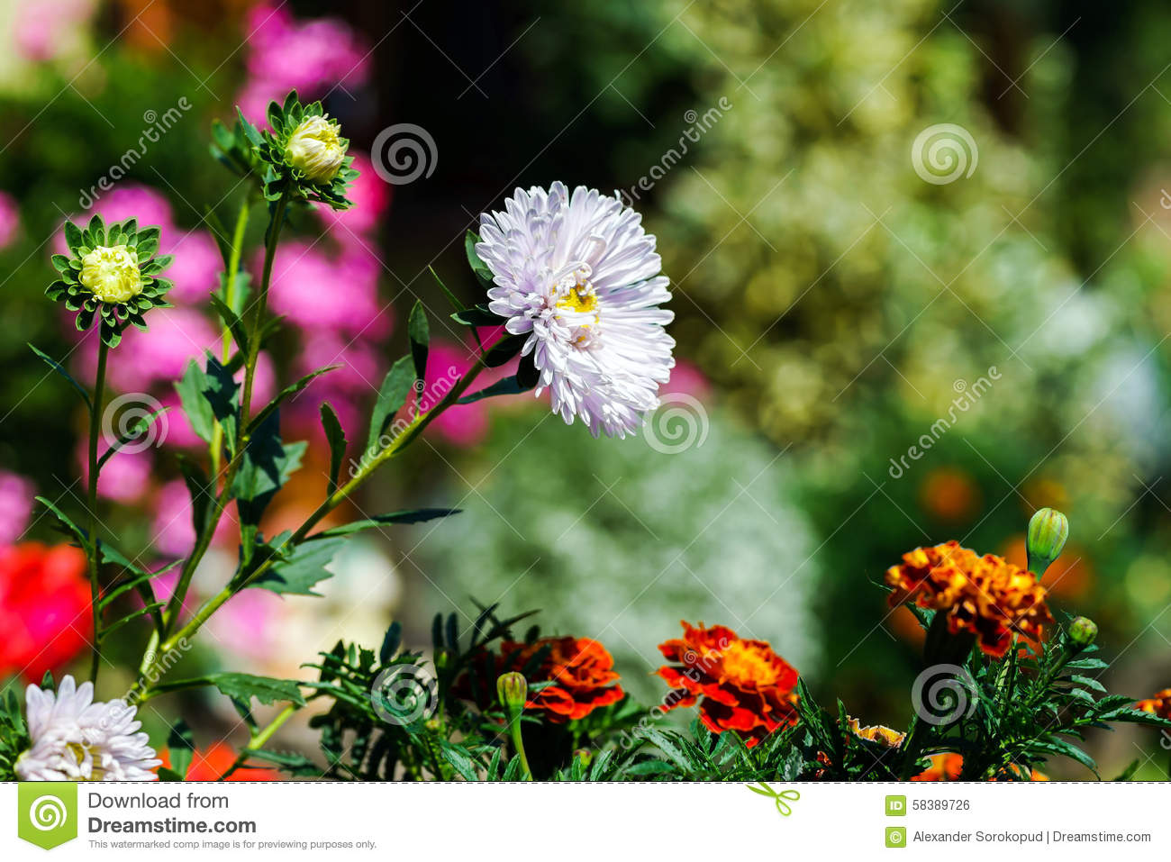 Beautiful natural gardens - Royalty Free Stock Photo