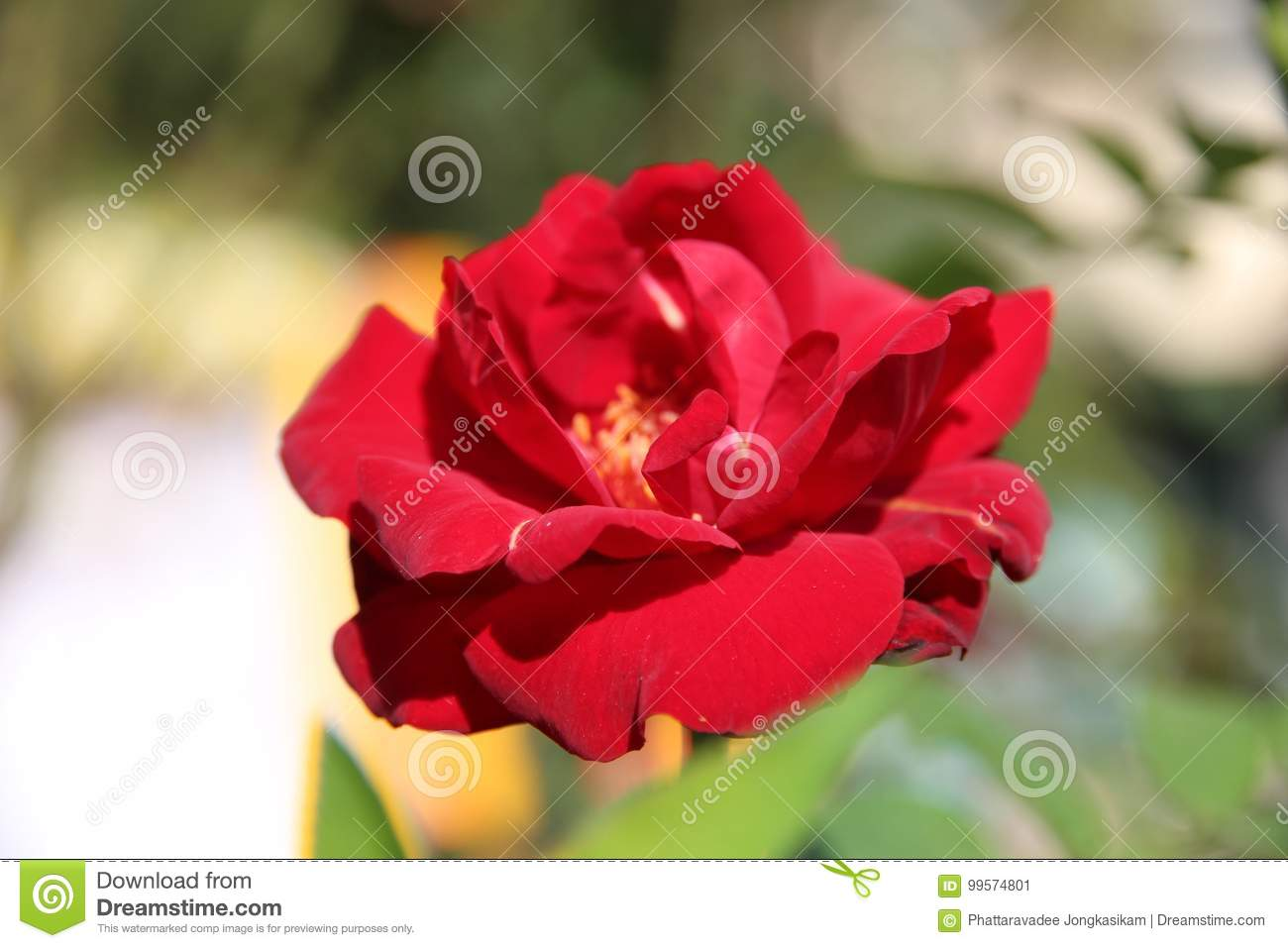 Beautiful natural flowers stock image image of chic 99574801 beautiful natural flowers izmirmasajfo