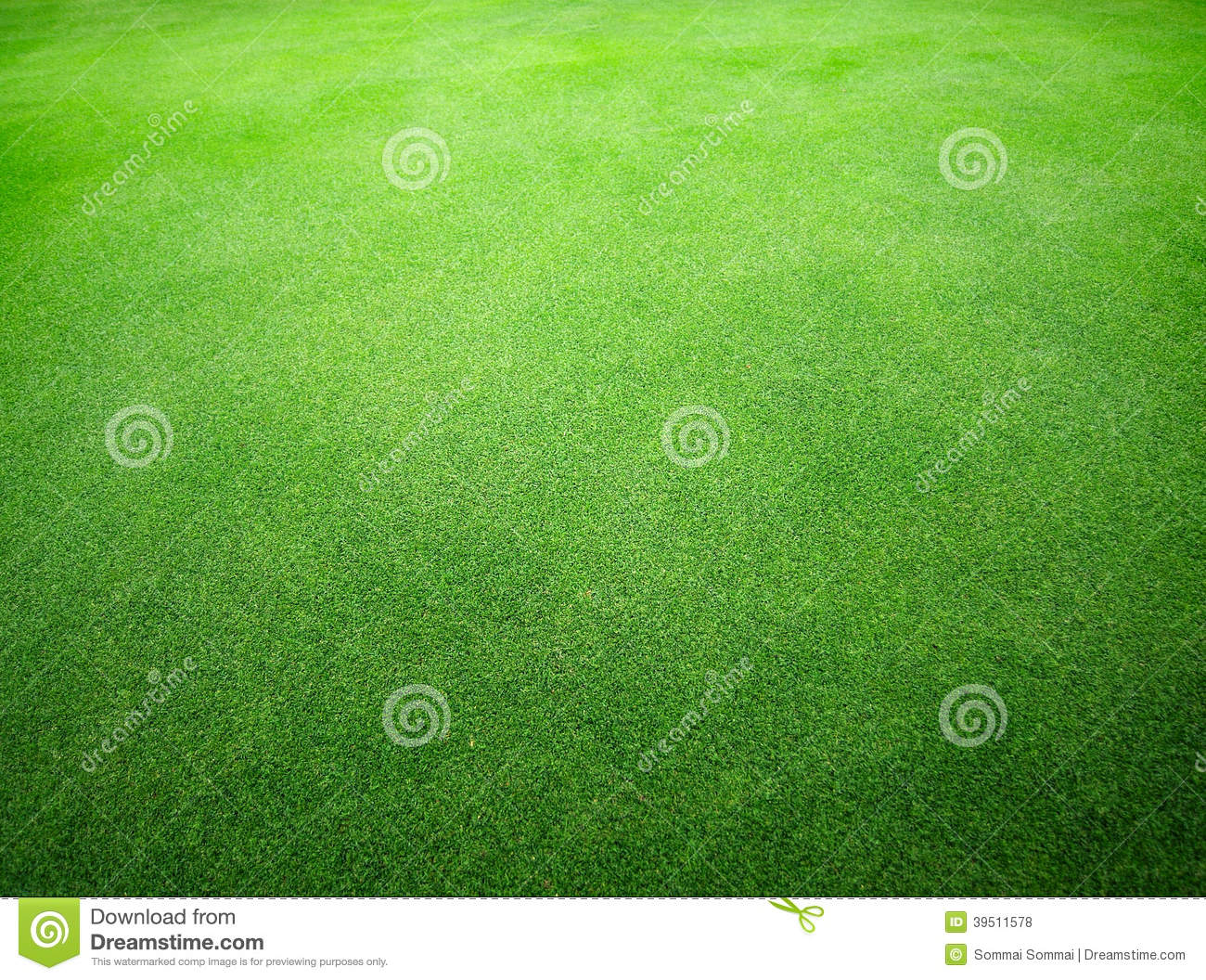 Beautiful natural green grass texture