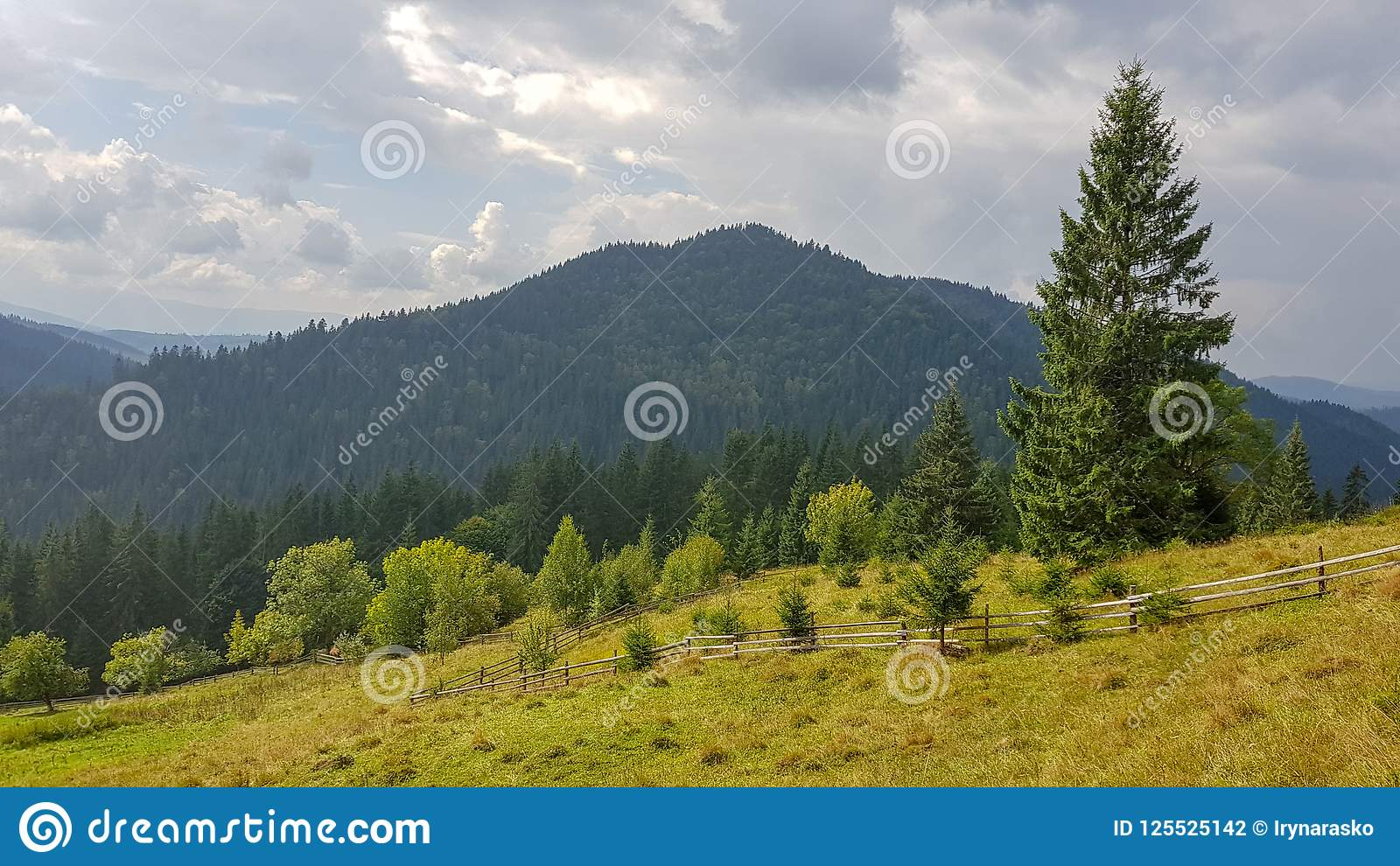 Download Beautiful Natural Landscape In Green Mountains And Fields Stock Photo - Image of fields, ukraine: 125525142