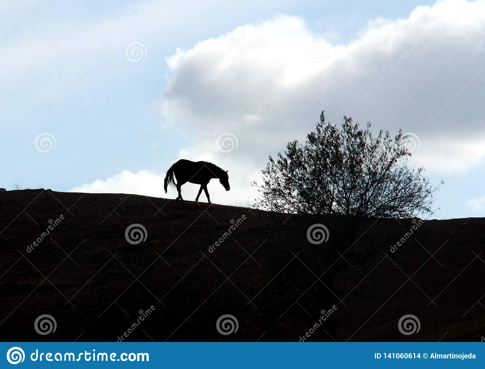 A backlight of a spanish horse and a tree.