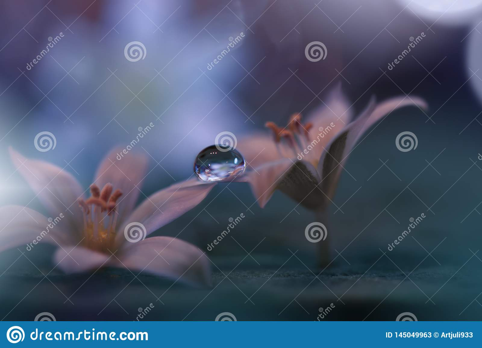Beautiful Nature Background Abstract Artistic Wallpaper Art Macro Photography Spring Flowers Water Drop Amazing Floral Photo Love Stock Image Image Of Brochure Colors 145049963