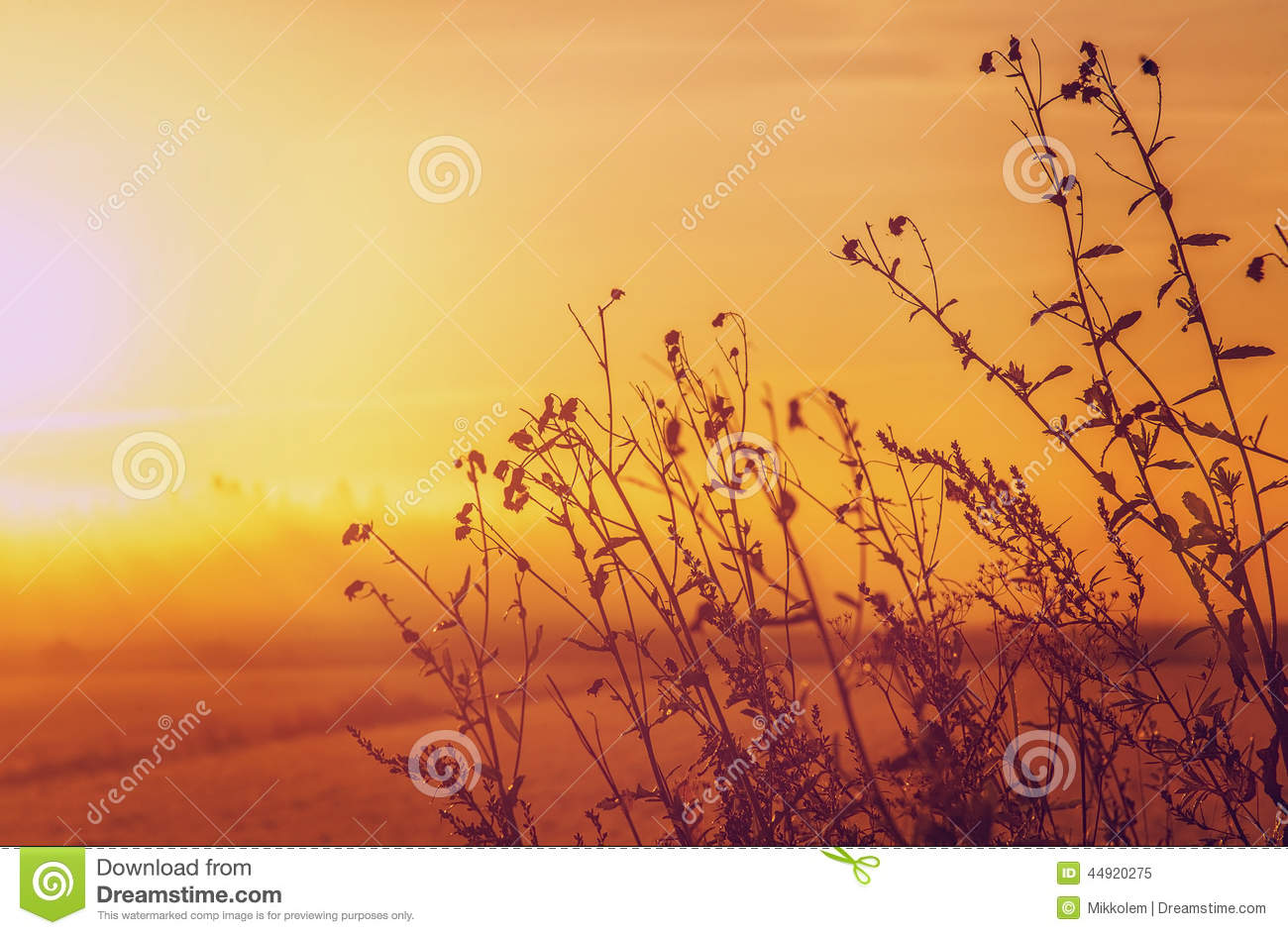 Picture editor nature pictures of nnature - Nature wallpaper editor ...