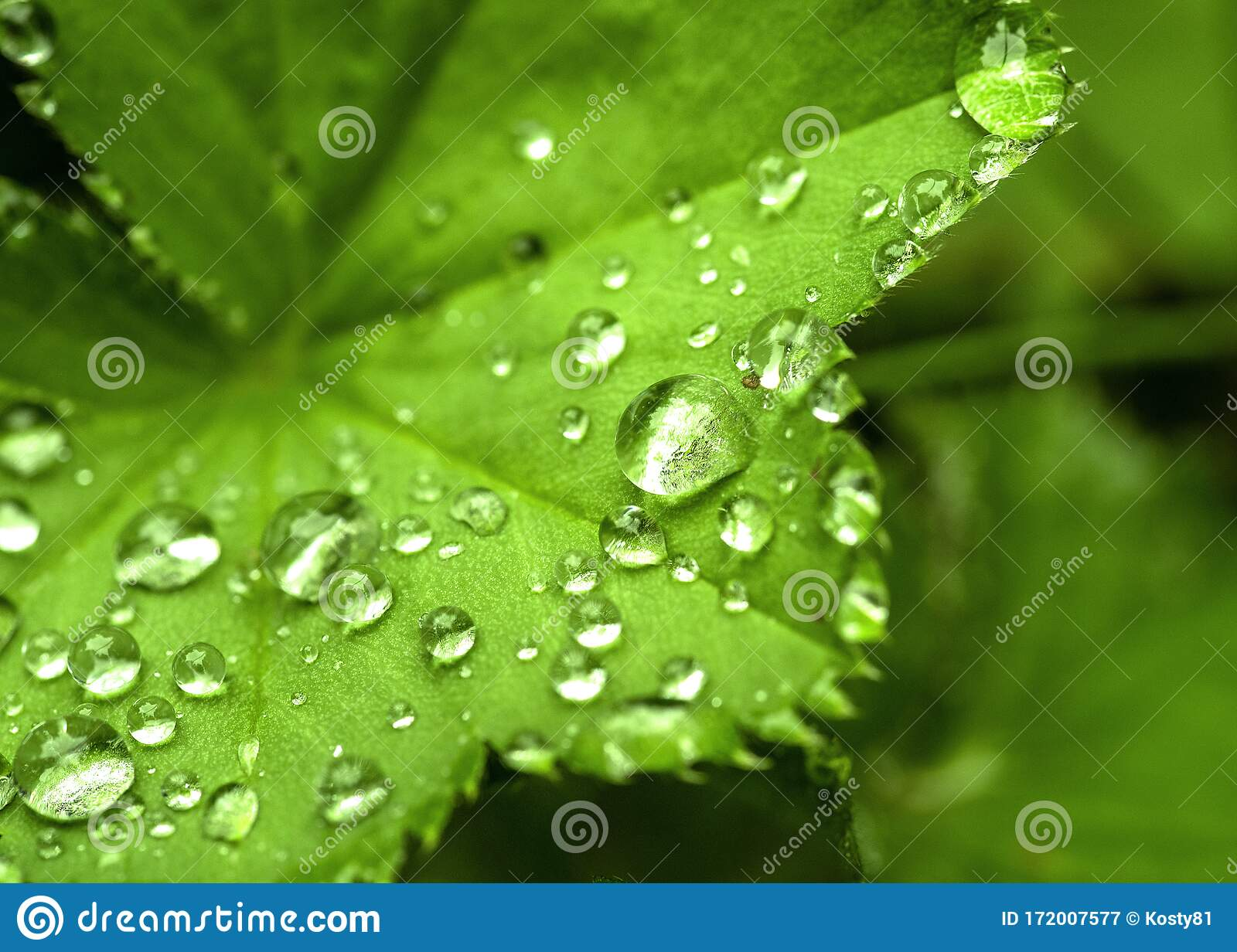 Beautiful Nature Background Morning Dew Drops Macro Natural Photography Stock Image Image Of Morning Photography 172007577