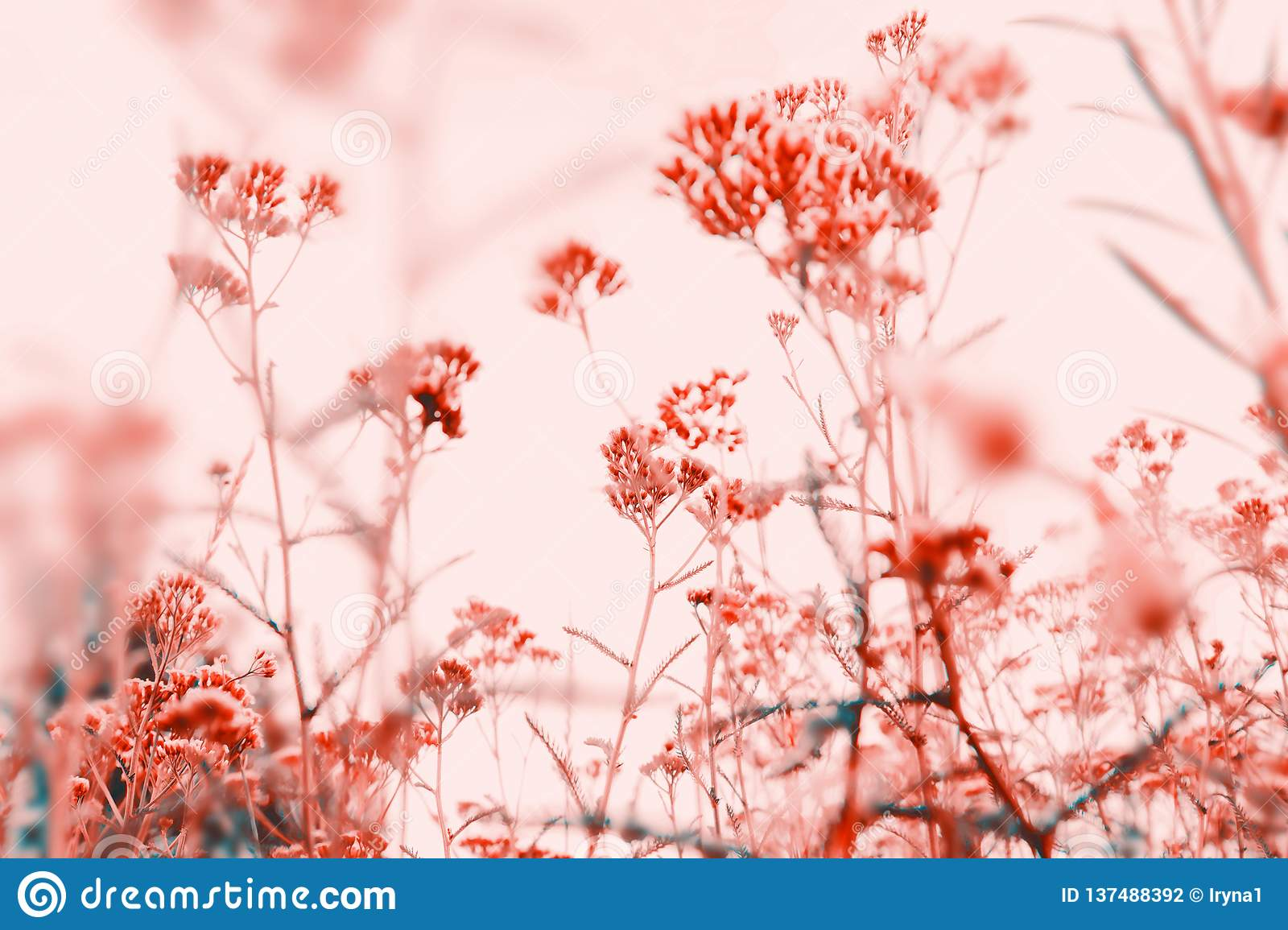 Beautiful Nature Pastel Floral Background Stock Photo Image Of