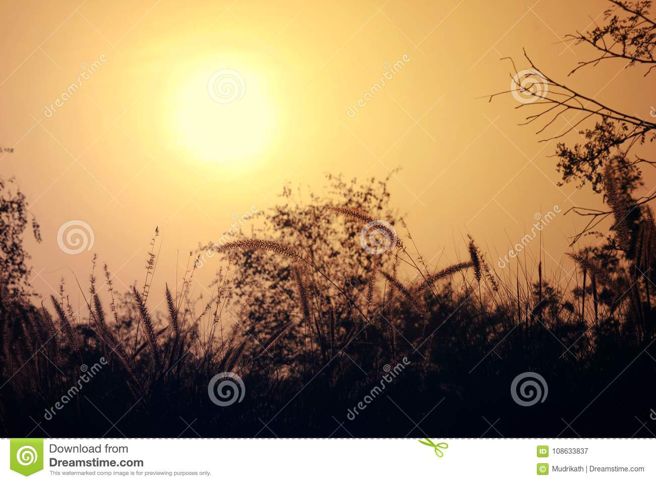 Beautiful nature scenery of sun, trees and sky. evening shot of picture, where the sun is setting.