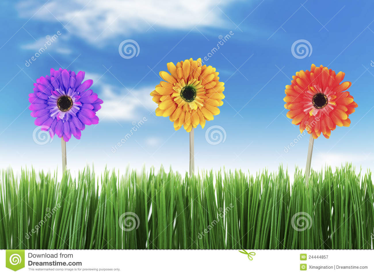 Beautiful Nature in Spring stock image. Image of garden ...