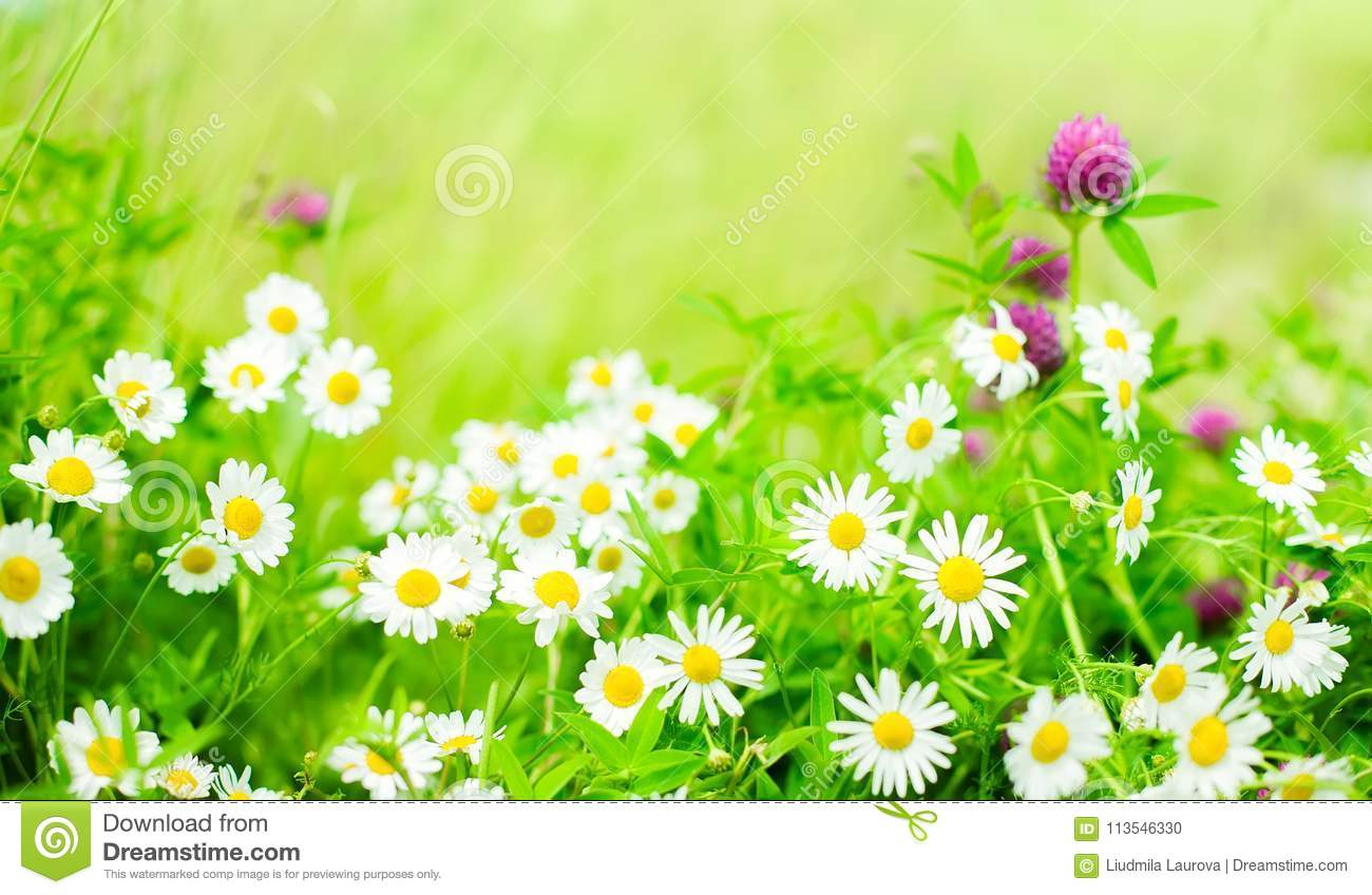 Beautiful Nature Summer Floral Background Stock Photo