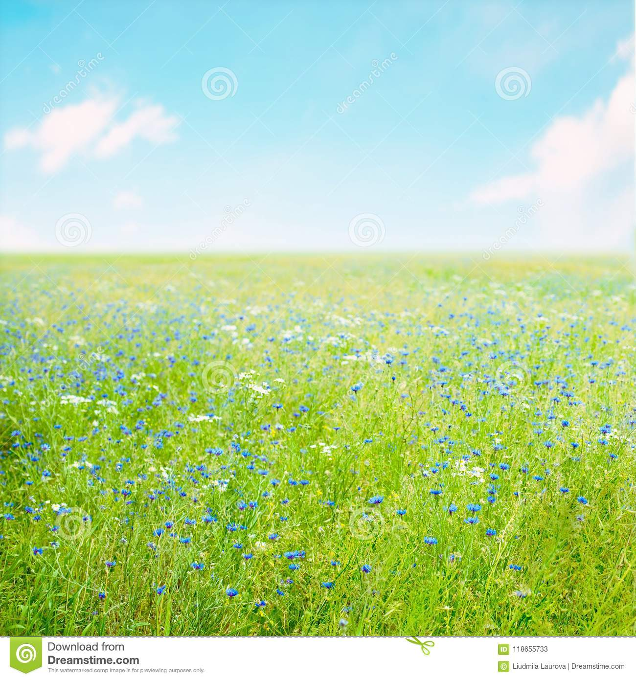 Beautiful Nature Summer Flower Background Stock Image Image Of Grass Natural 118655733